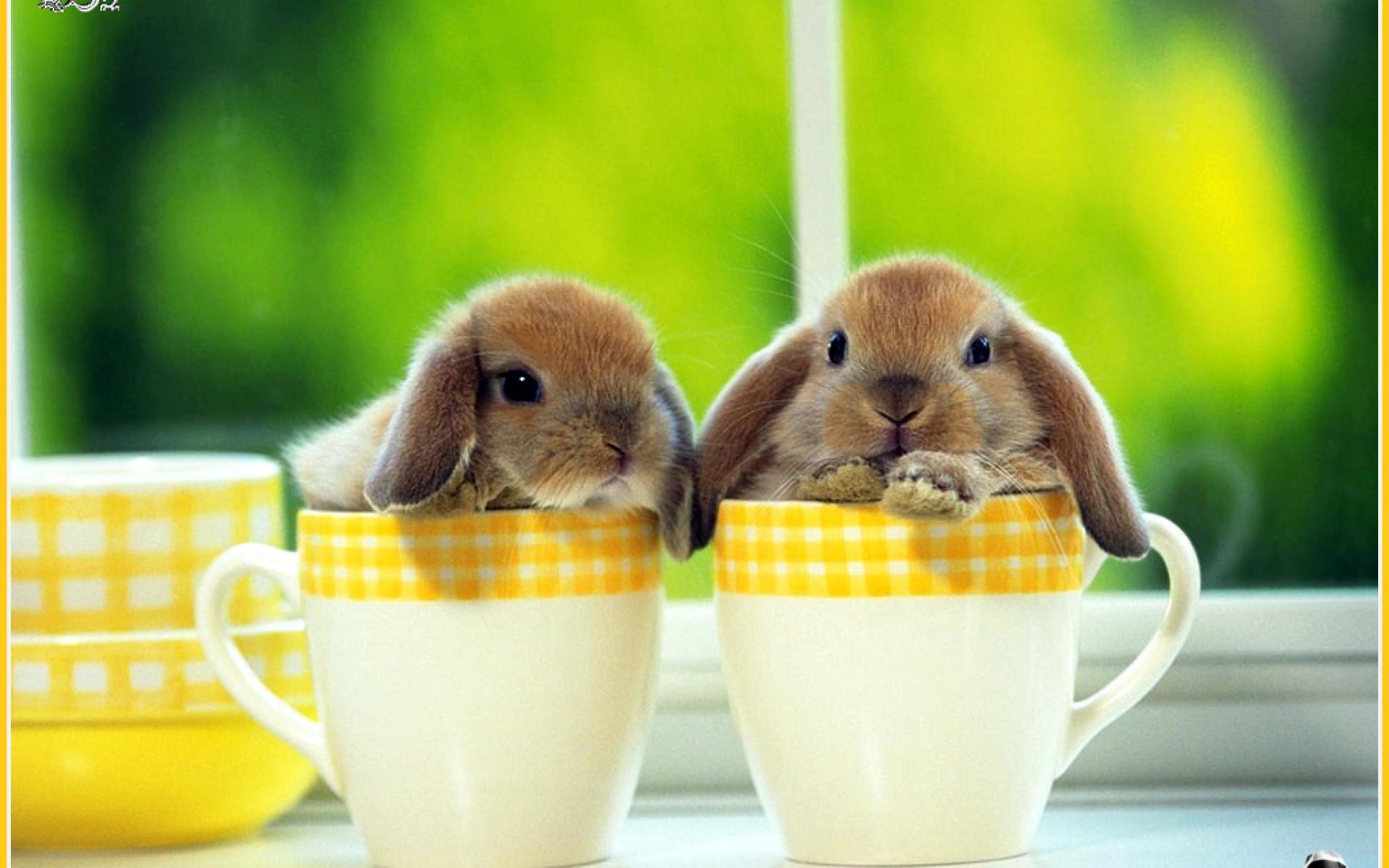 pics of rabbits