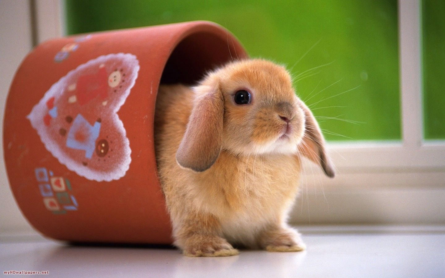 cute rabbit pictures