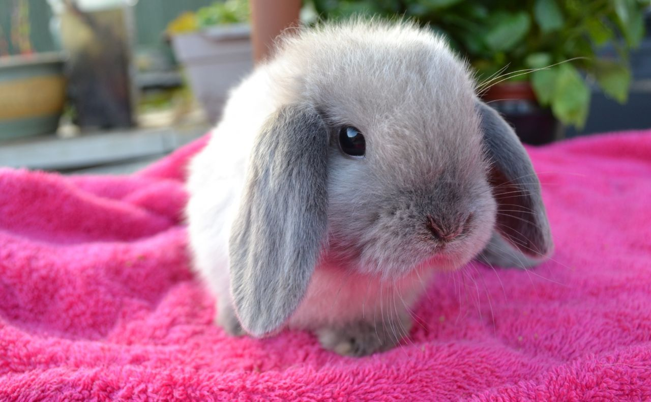 show me pictures of rabbits
