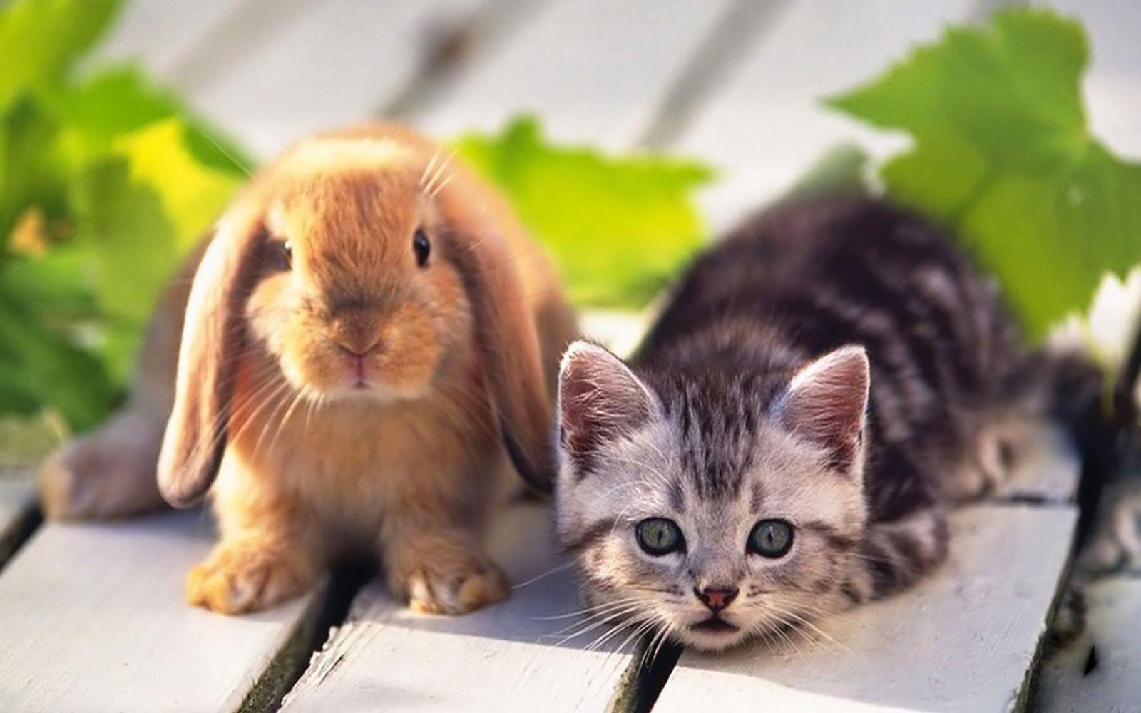 white rabbit images