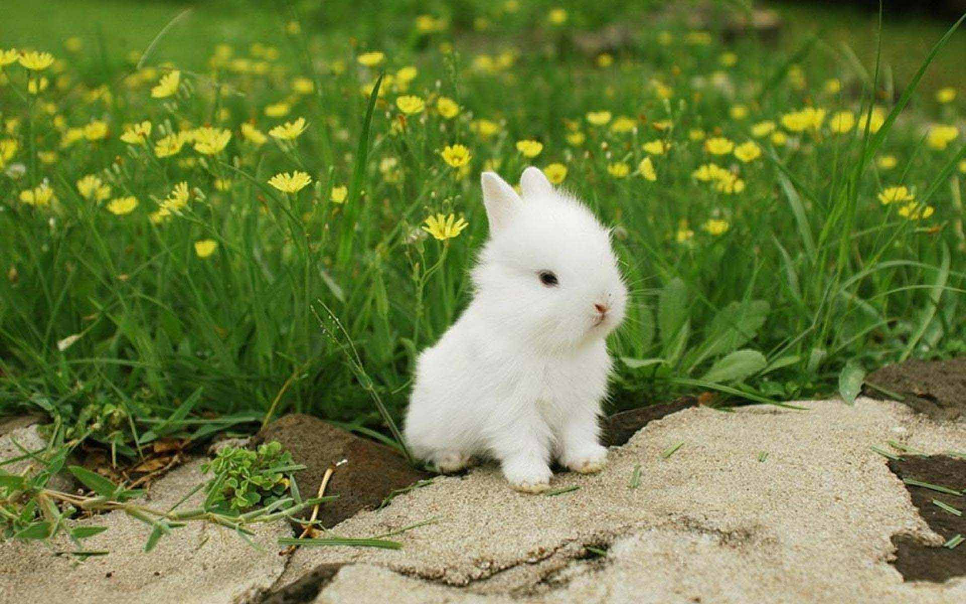 pictures of bunny rabbits