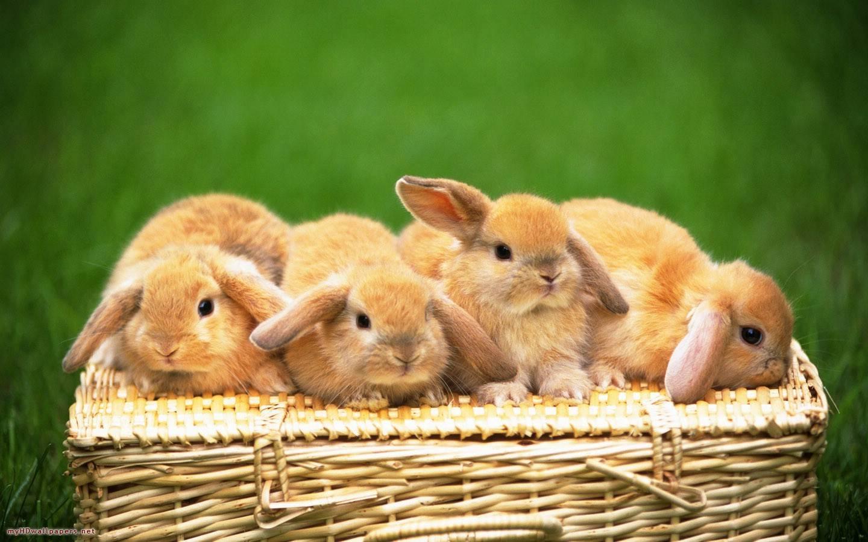 pics of bunnies