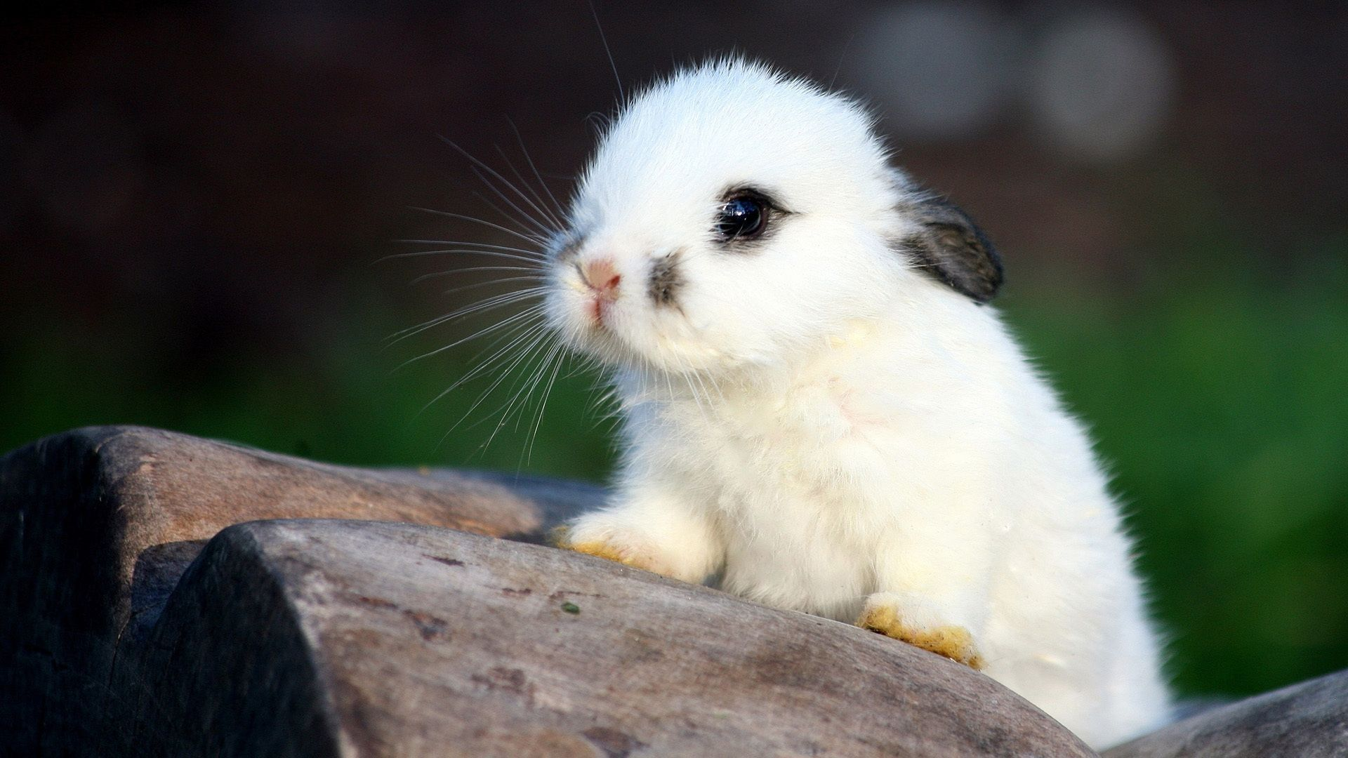 a picture of a rabbit