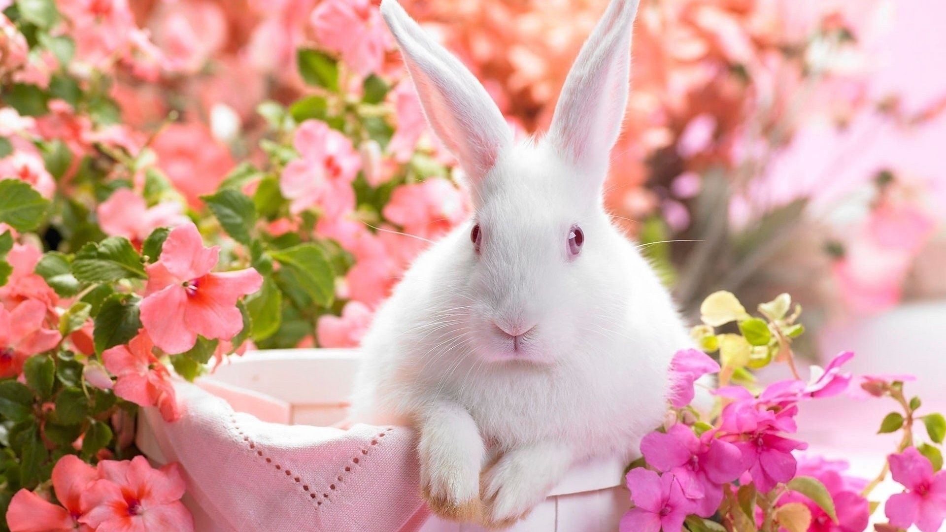 pictures of bunny rabbit