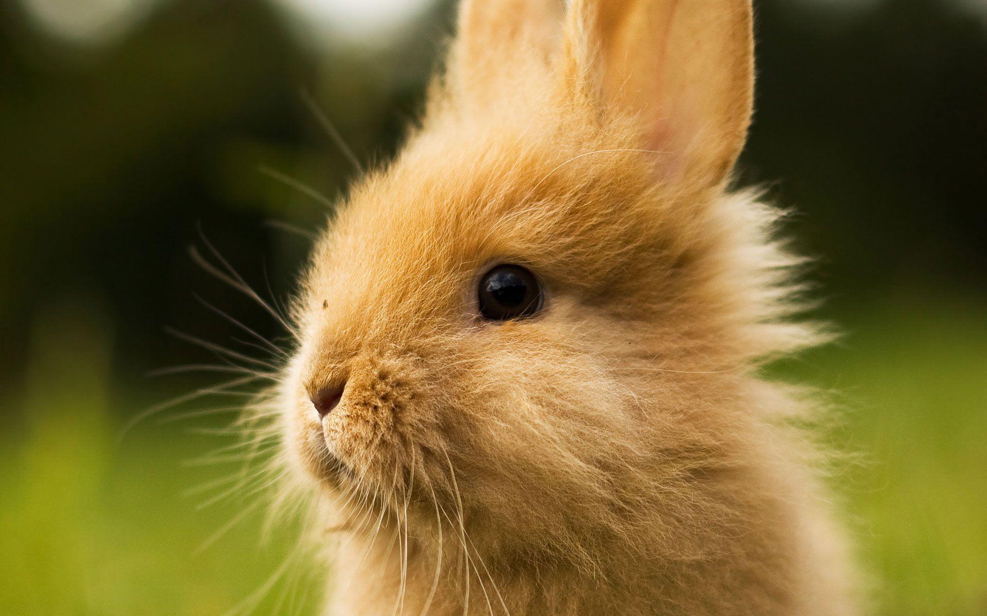 photos of bunny rabbits