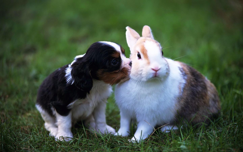 wallpapers rabbits