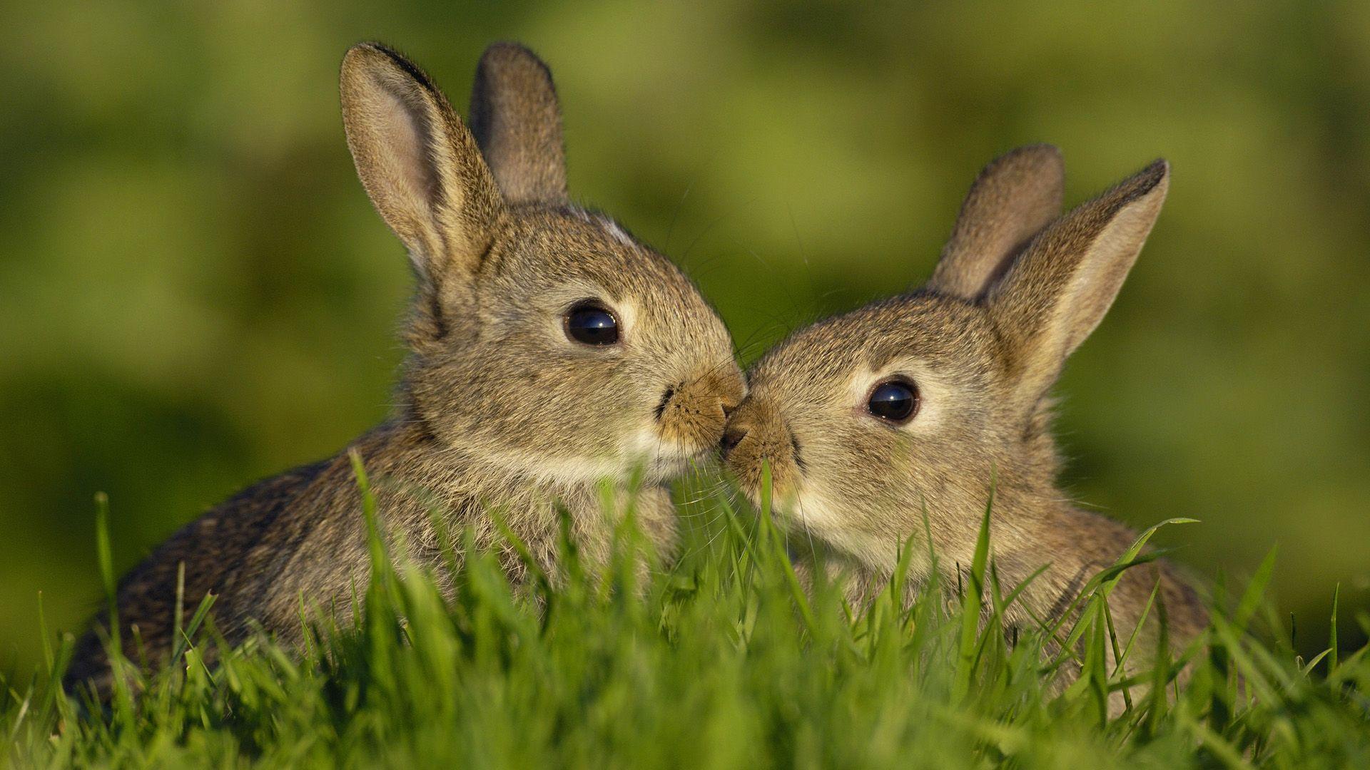 rabbit pictures free