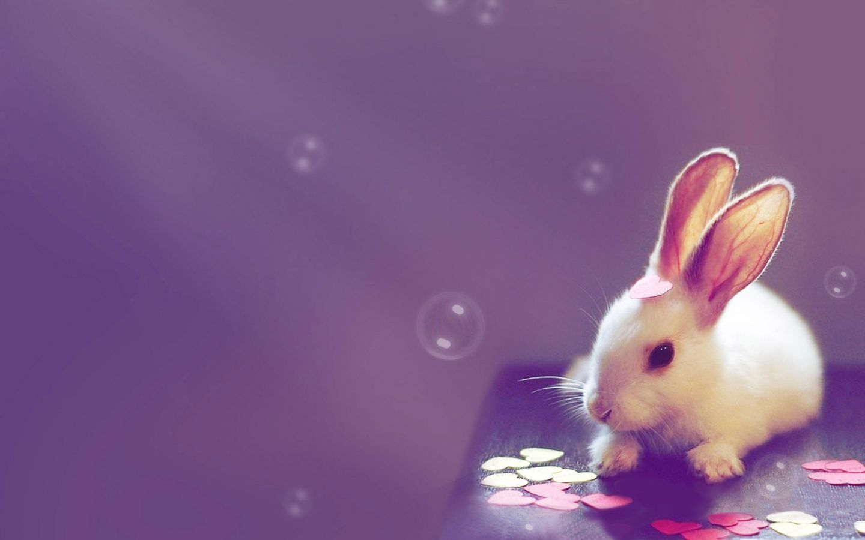 rabbit photos free