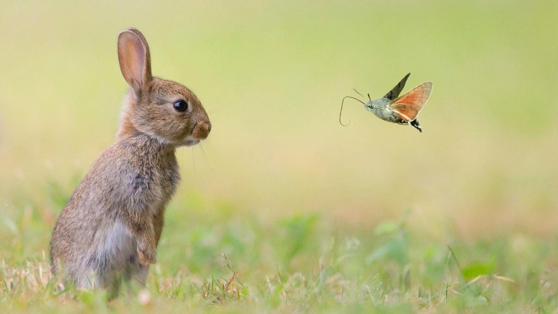 pic of rabbit hd
