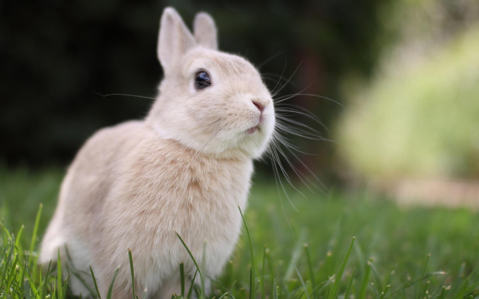 wallpaper rabbit 4k