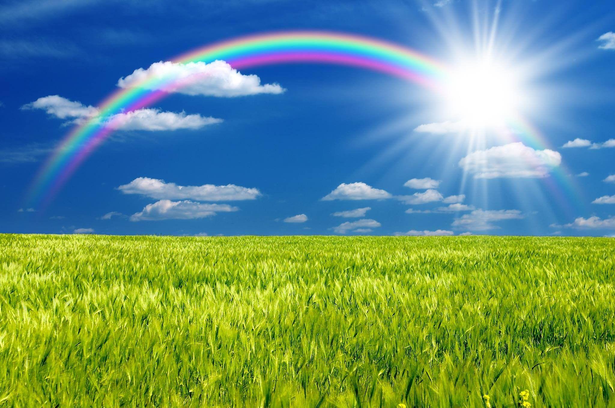 rainbow wall paper