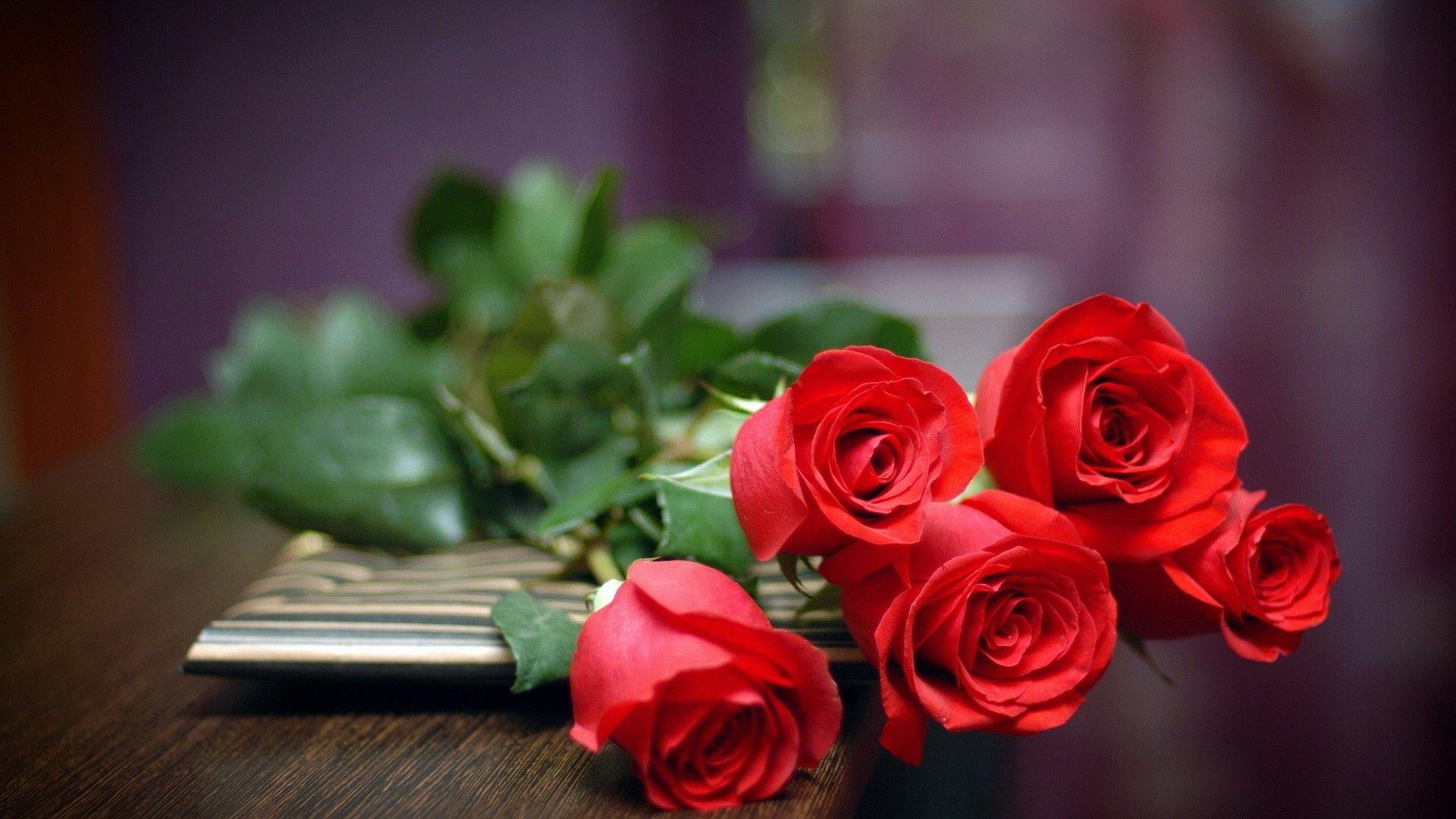 red rose wallpaper free download