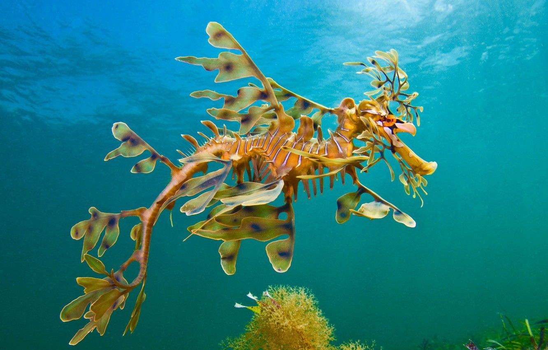 sea horse photography