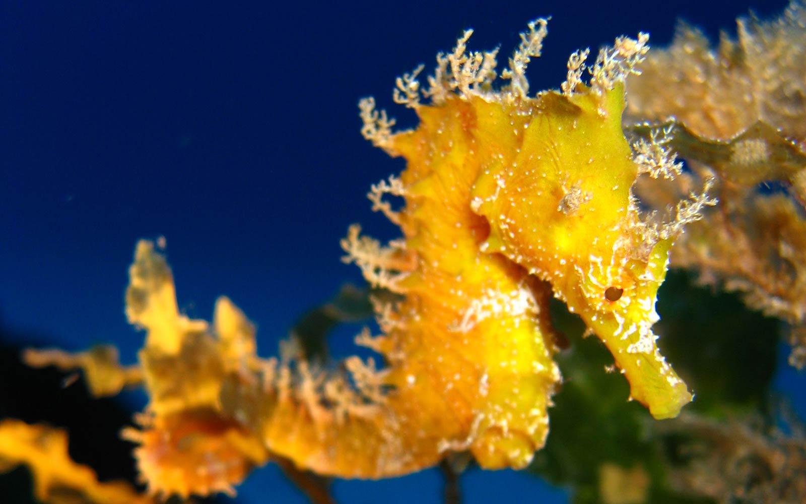 seahorse photo
