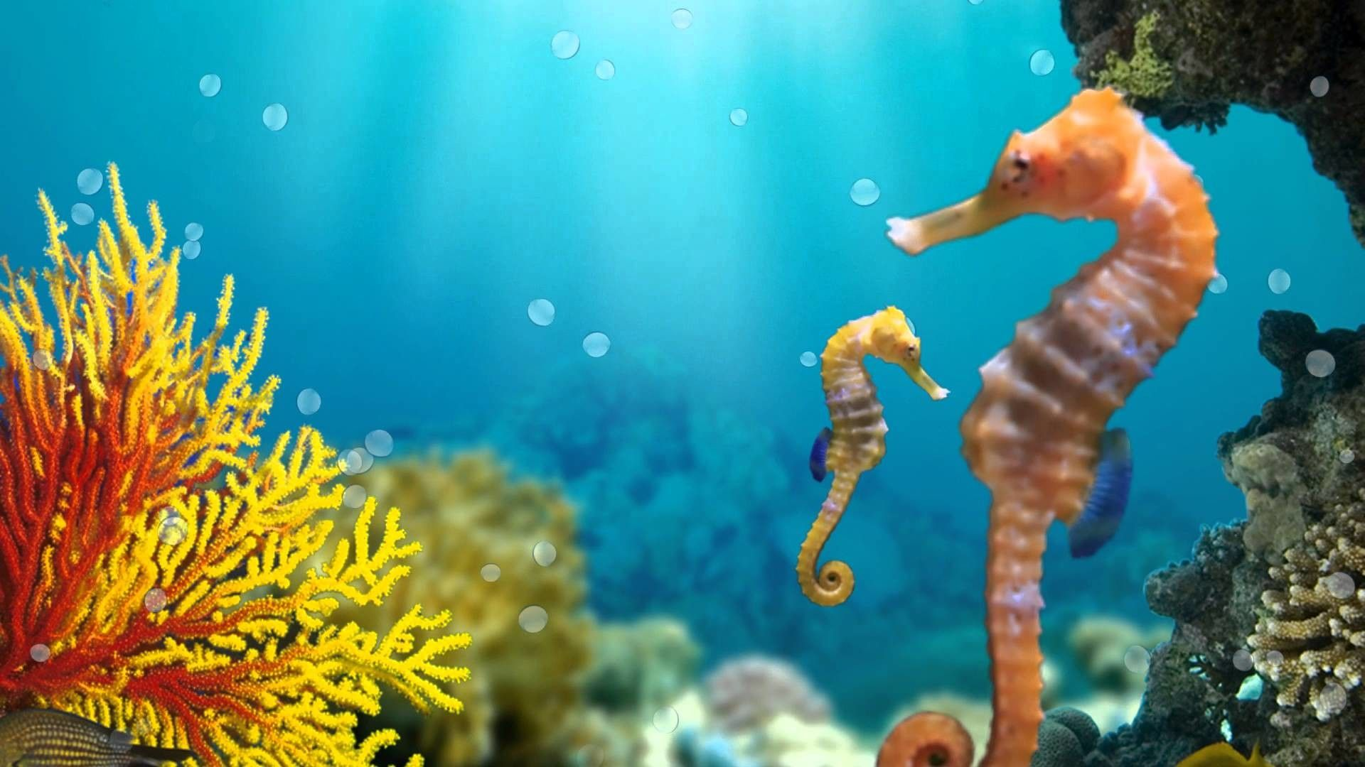 a picture of a seahorse