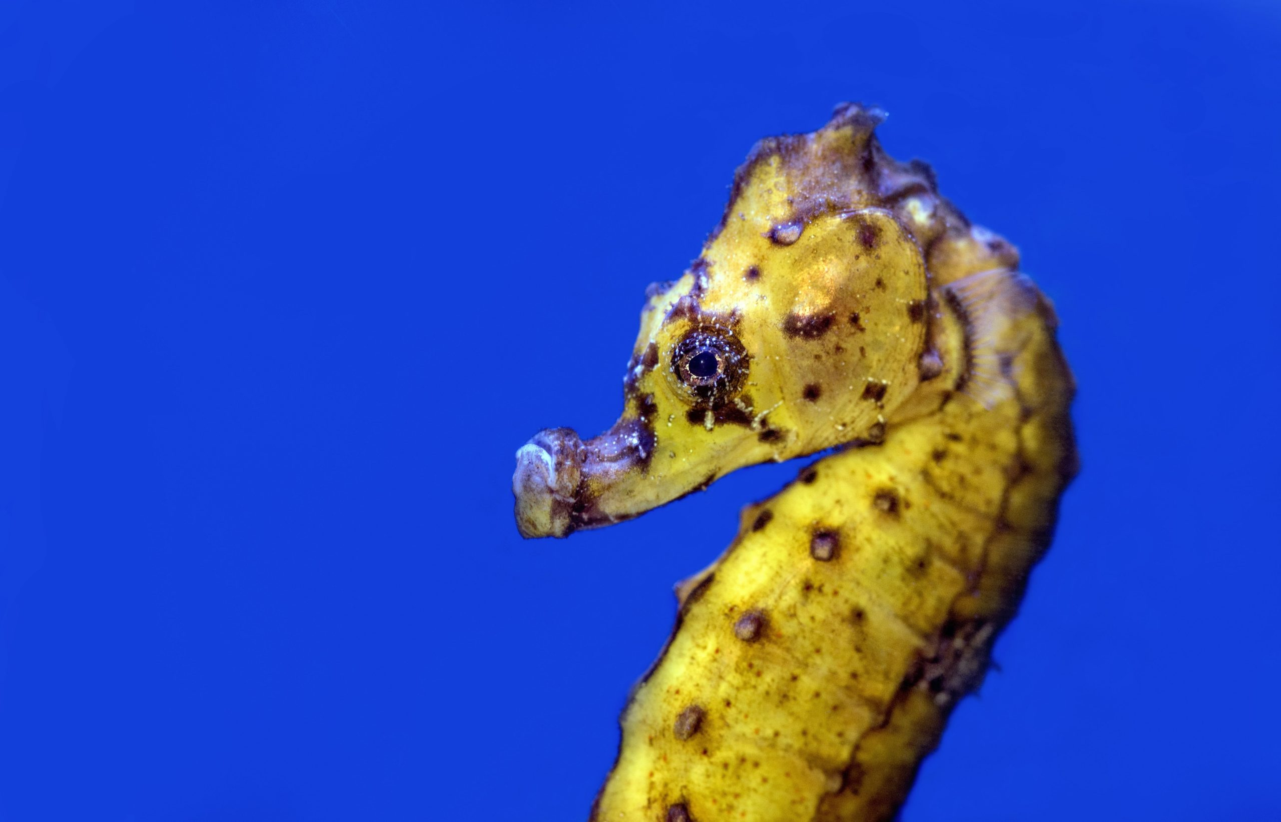 pictures of seahorses underwater