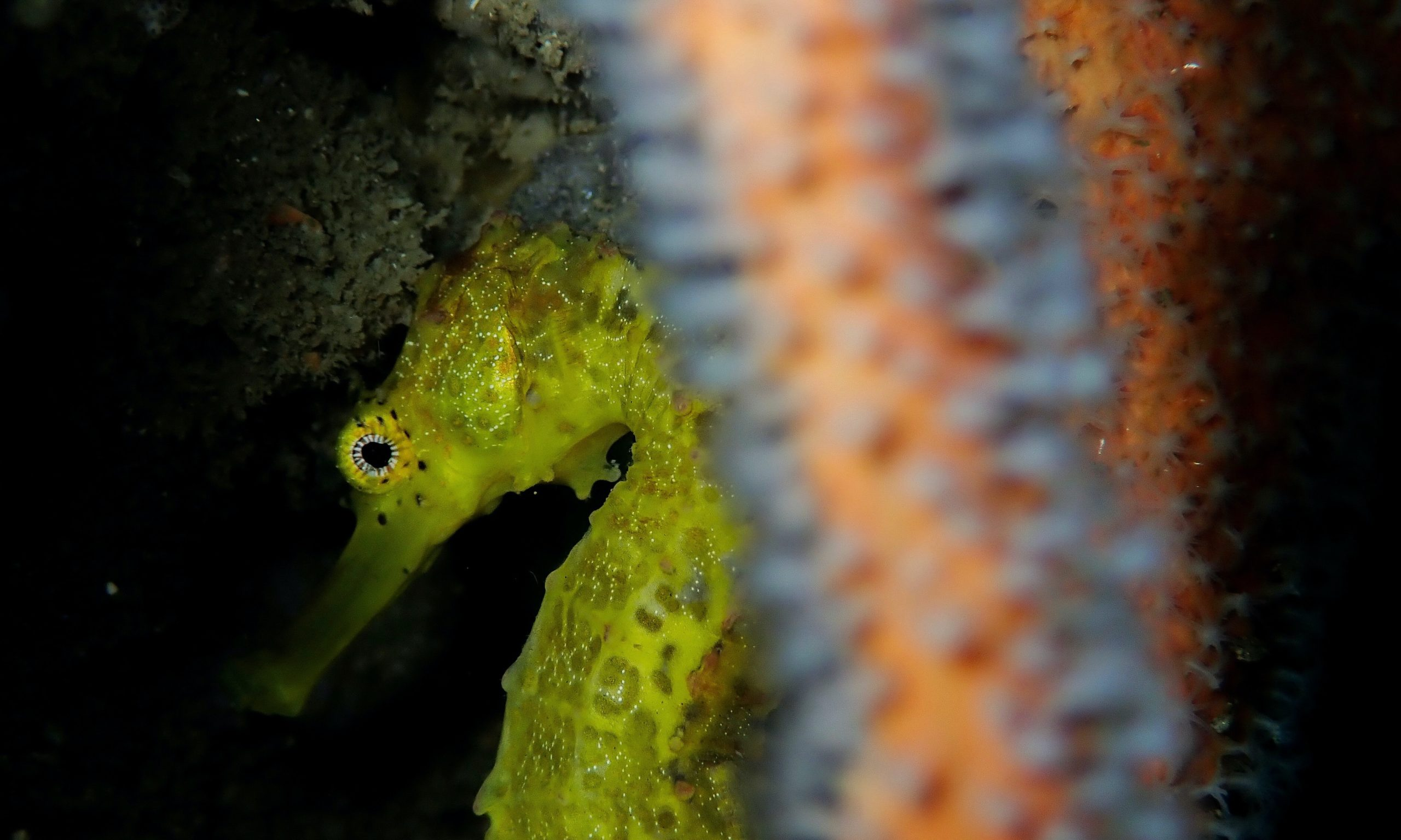 seahorses images free