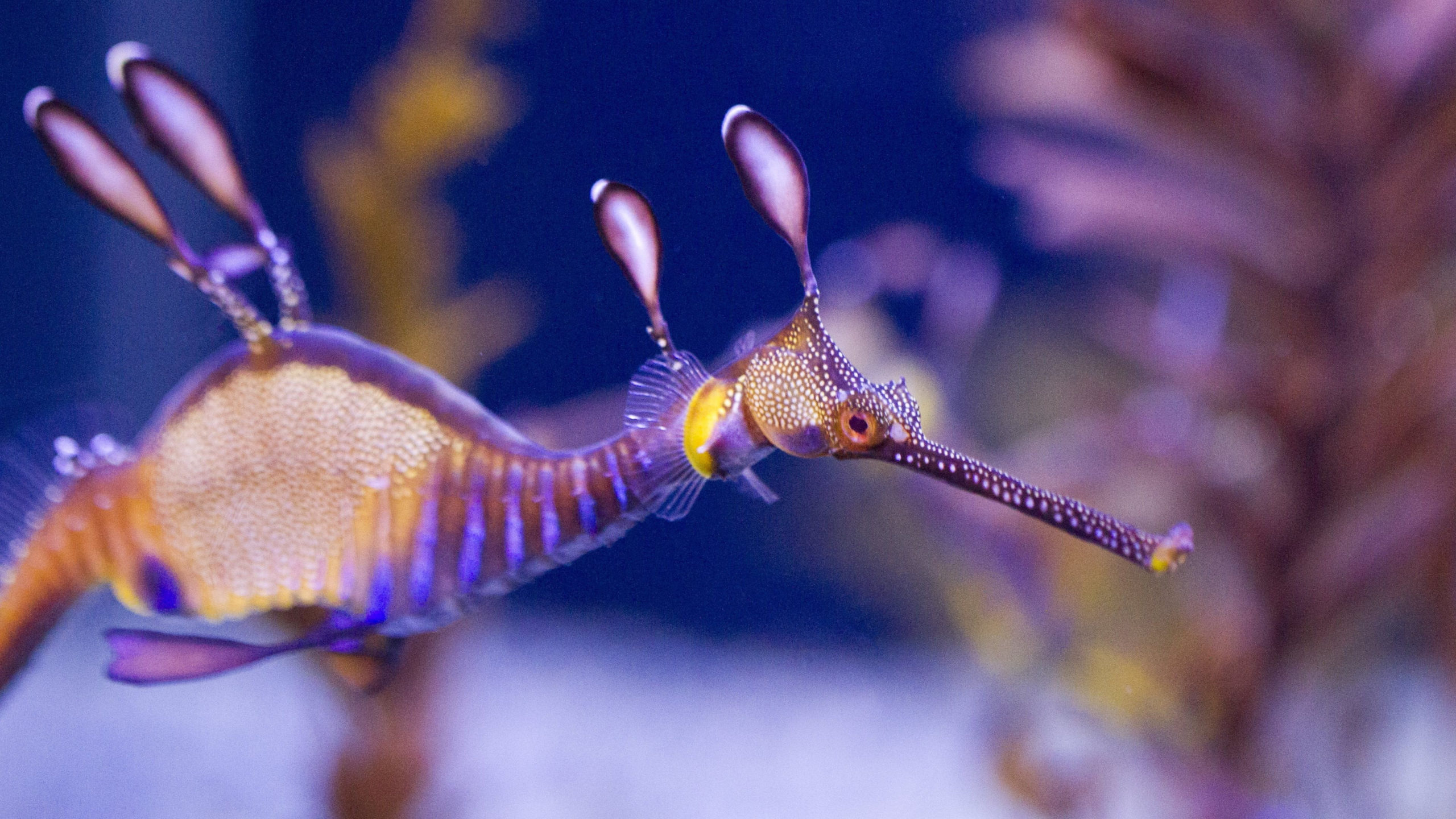 seahorse is a fish or mammal