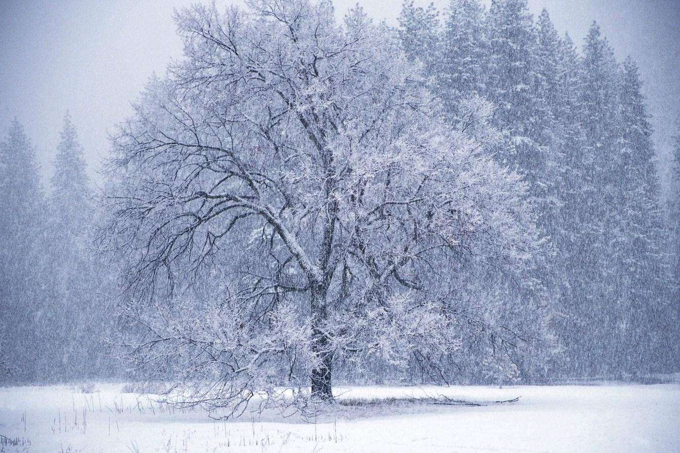 snowing desktop background