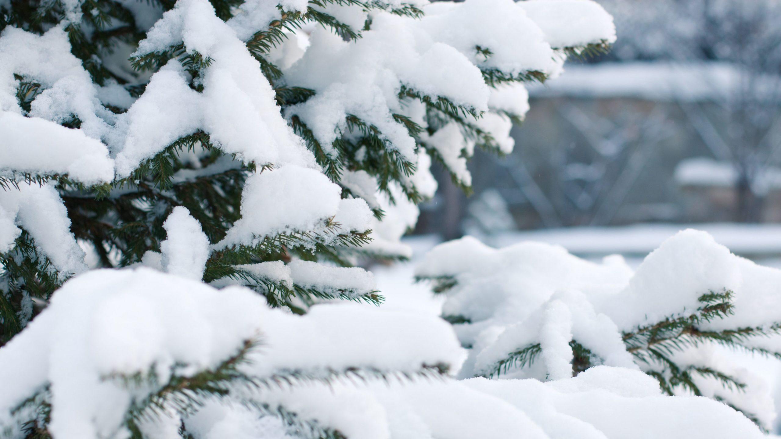 snow wallpaper iphone