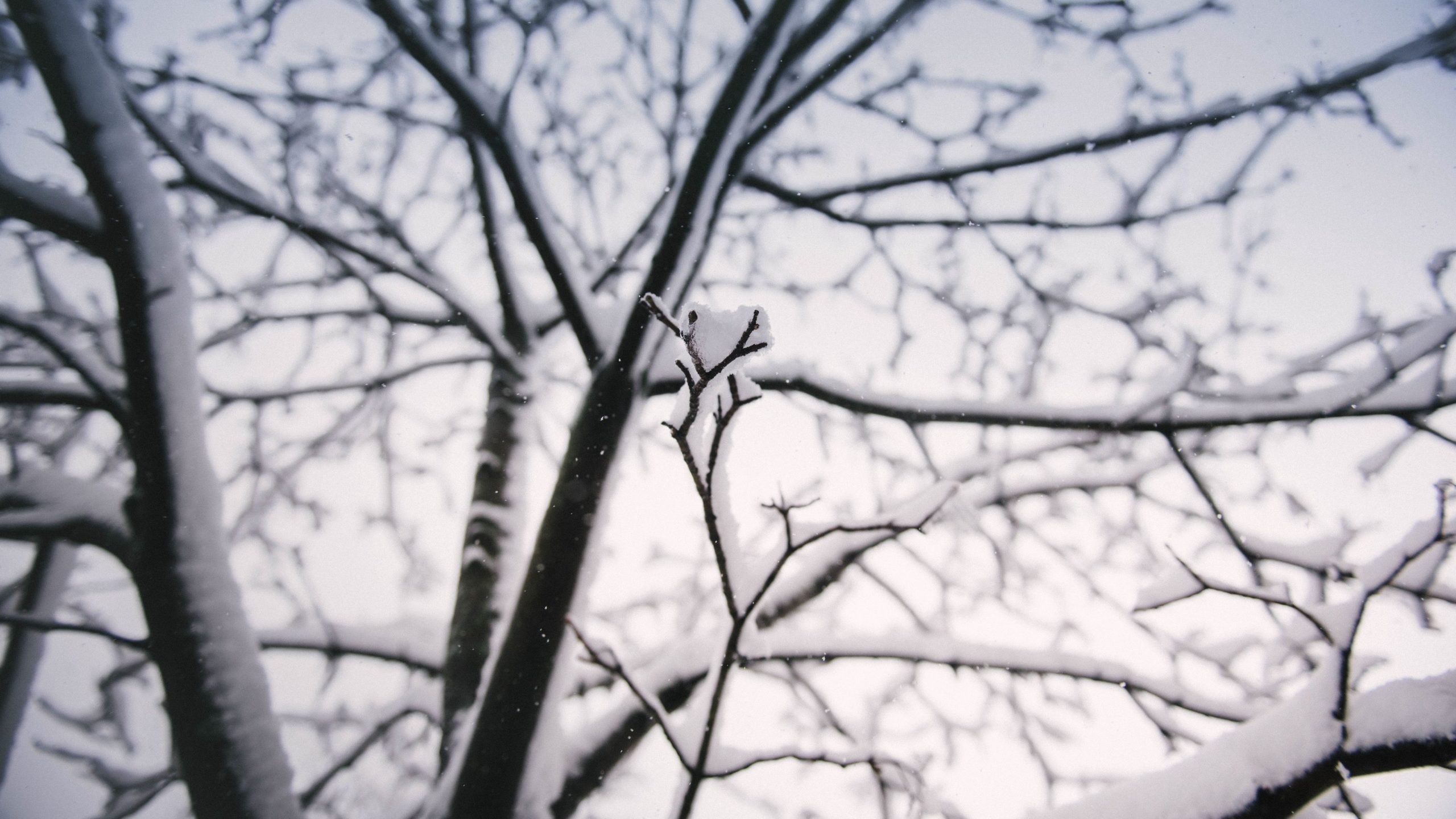 snowing images free