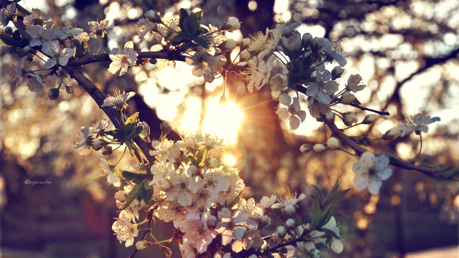 wallpapers springtime