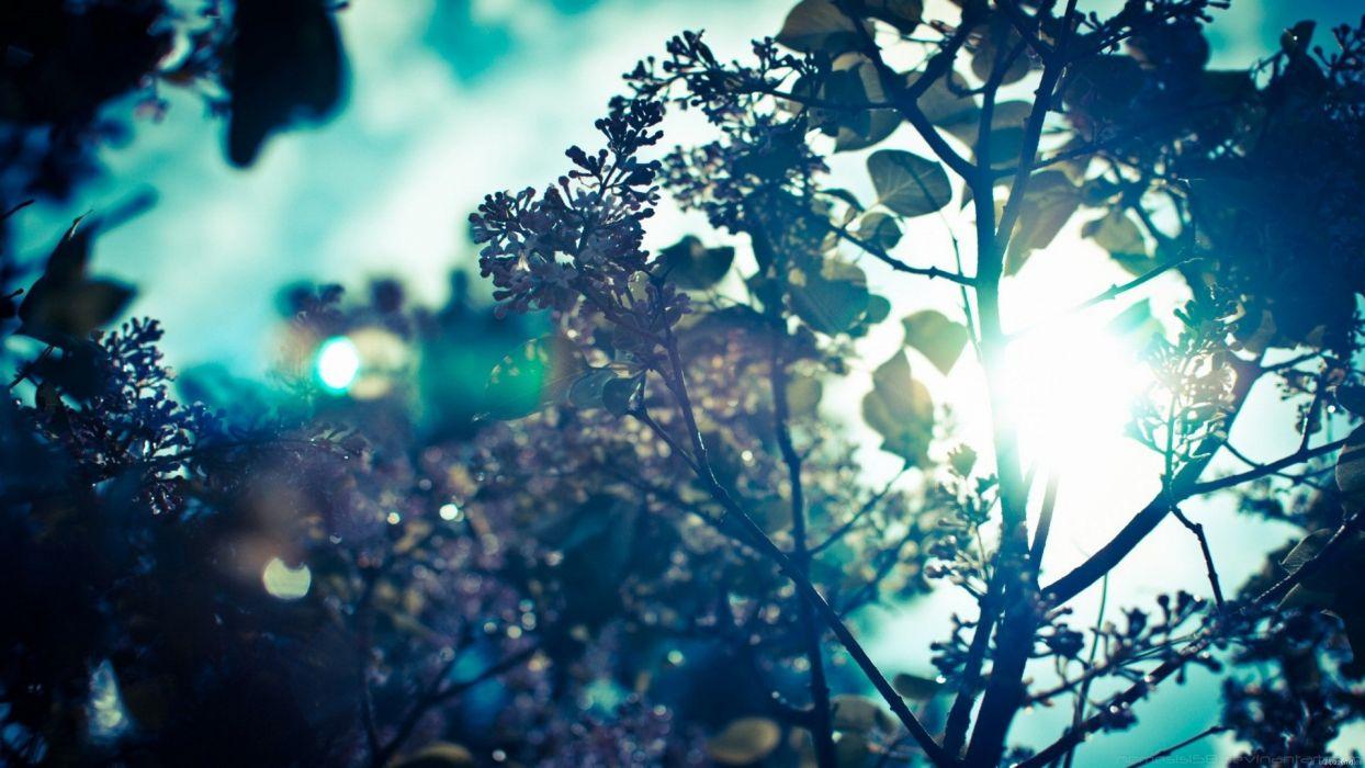 summer wallpaper 1080p, desktop summer