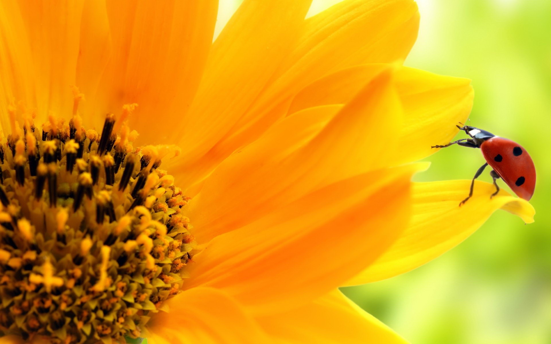 sunflower background tumblr