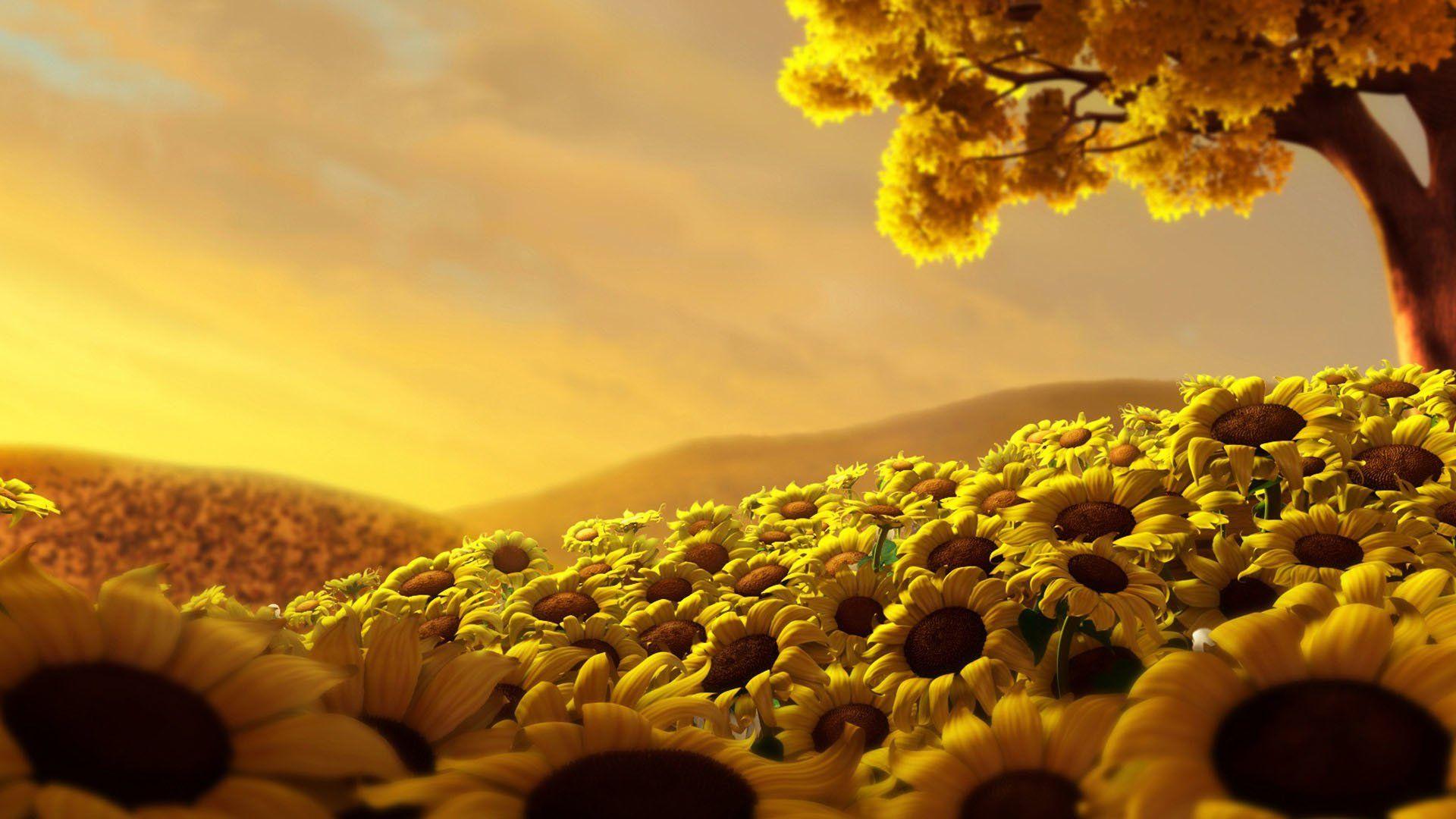 sunflower phone background