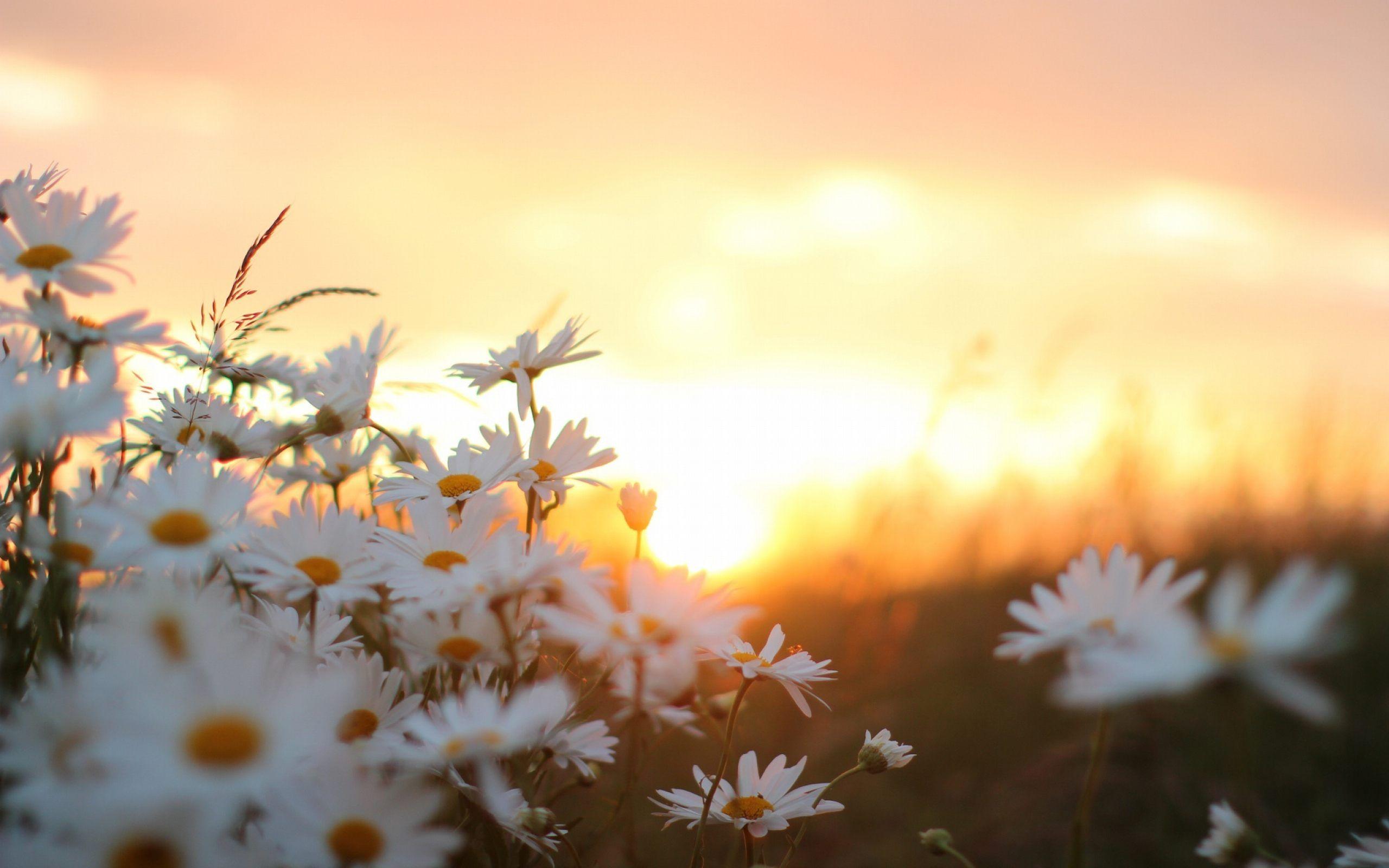 beautiful sunrises pictures