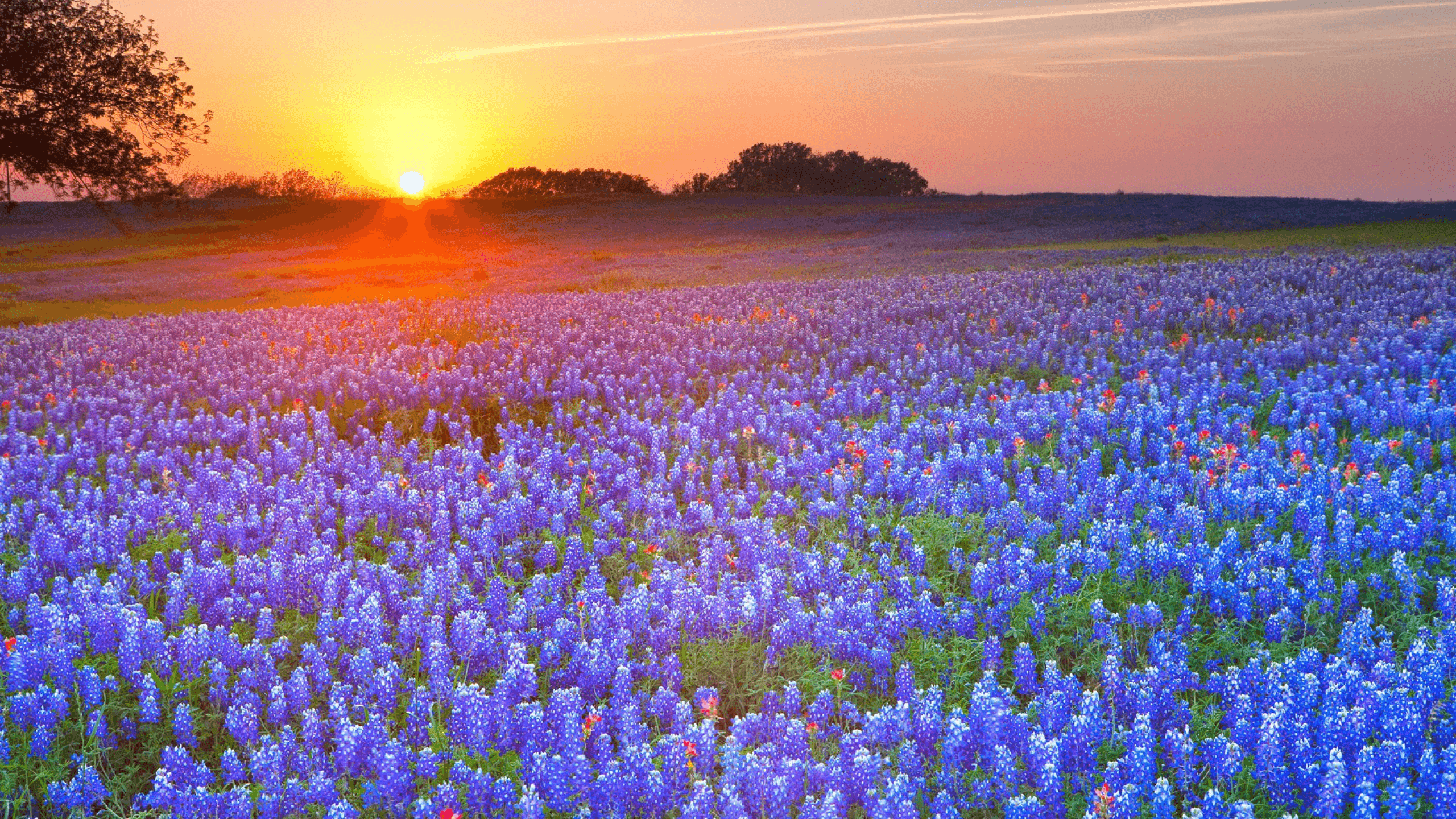 texas backgrounds, texas wall paper