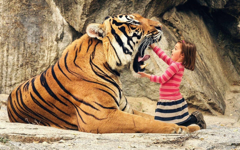 www tiger image