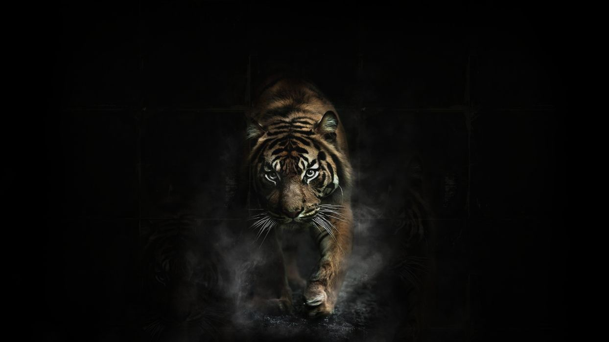 tiger photo hd