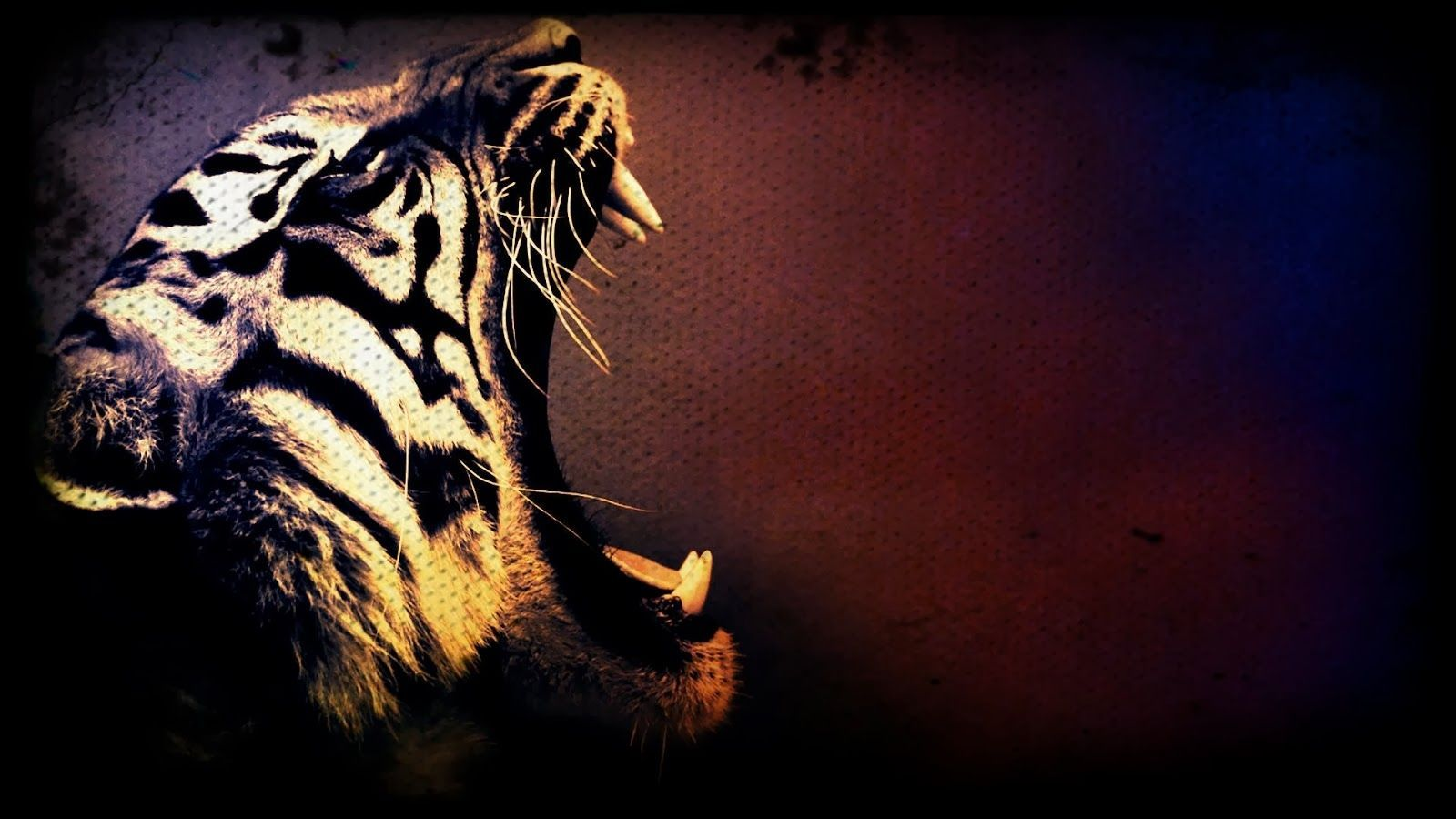 hd wallpapers of tiger
