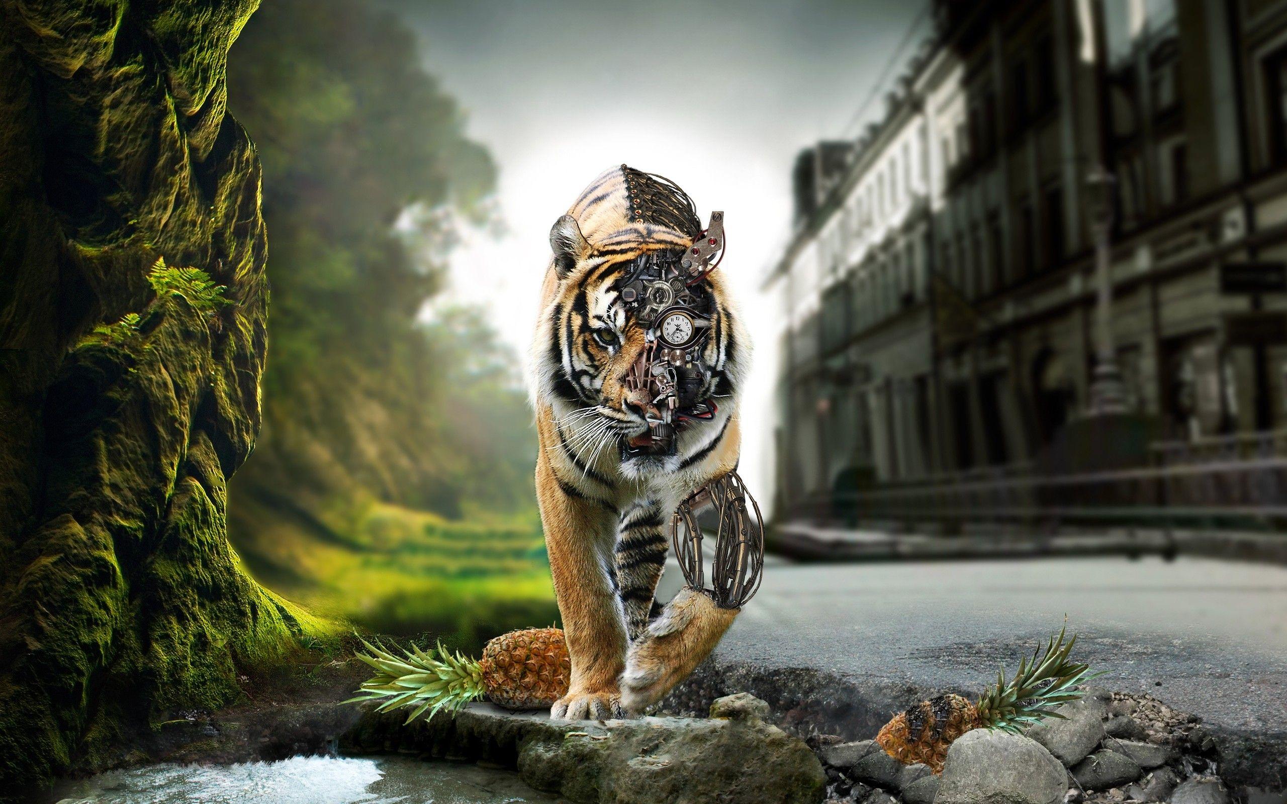 tiger photo tiger photo