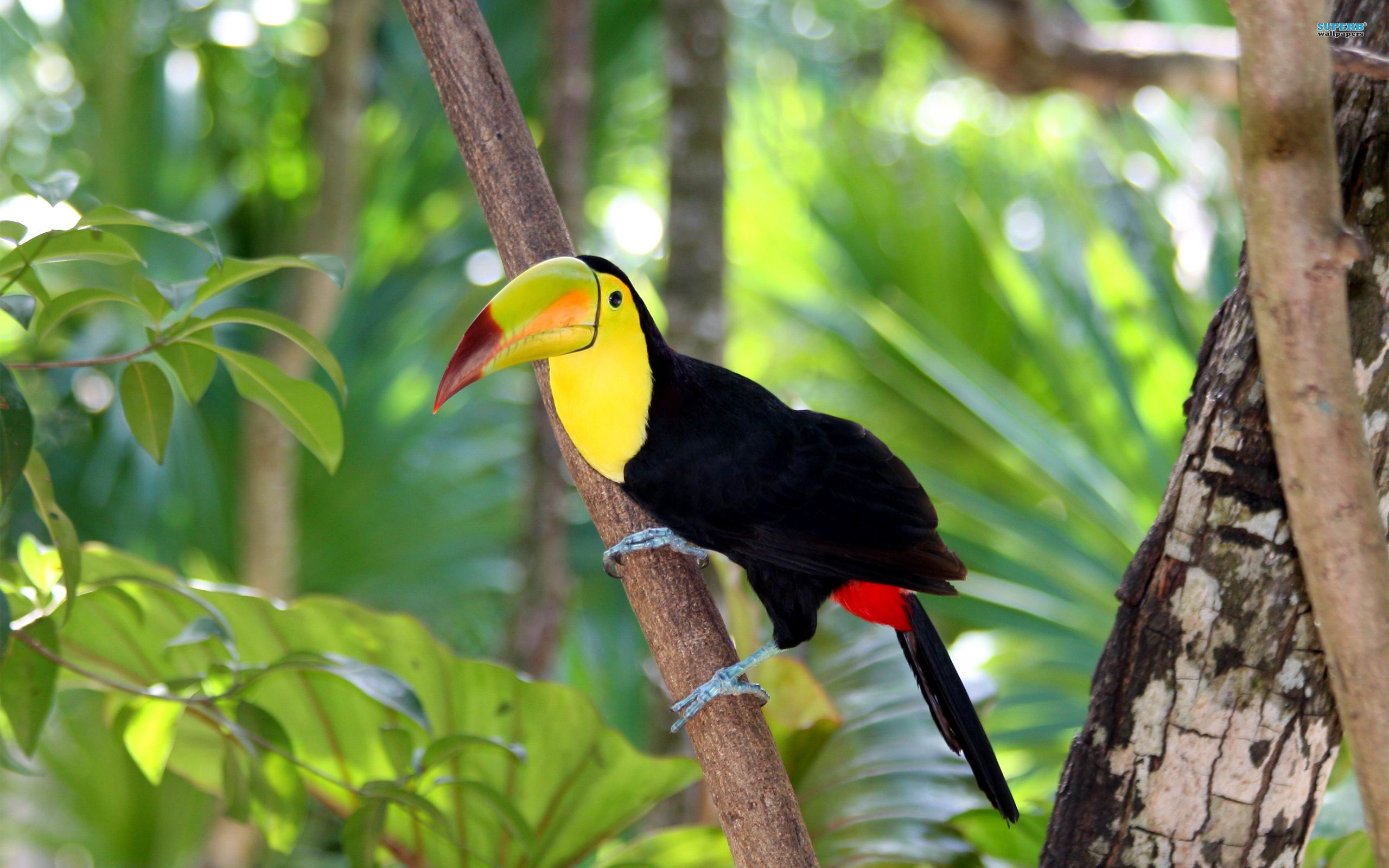 toucan photos