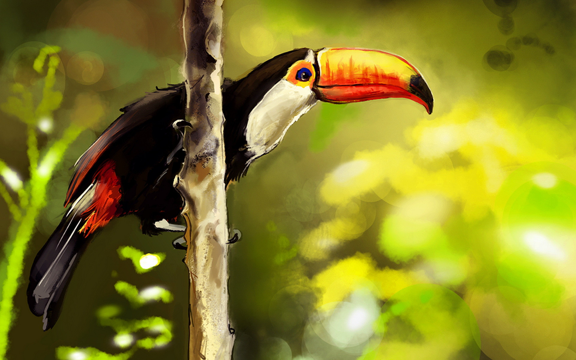 pictures of a toucan