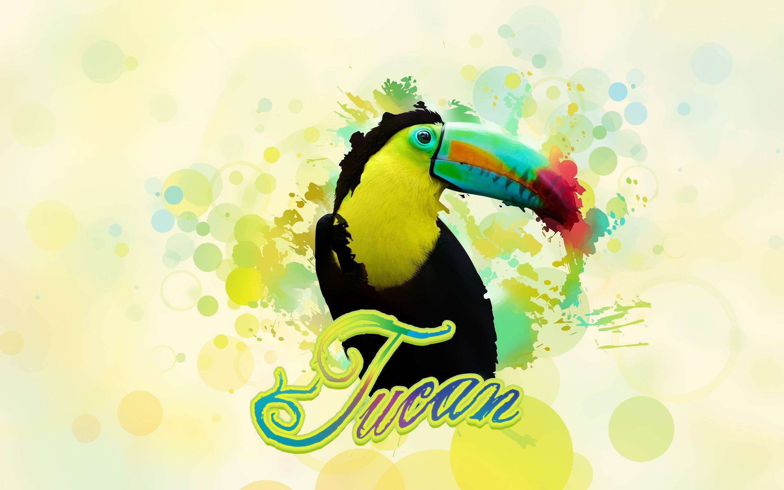 toucan photos free
