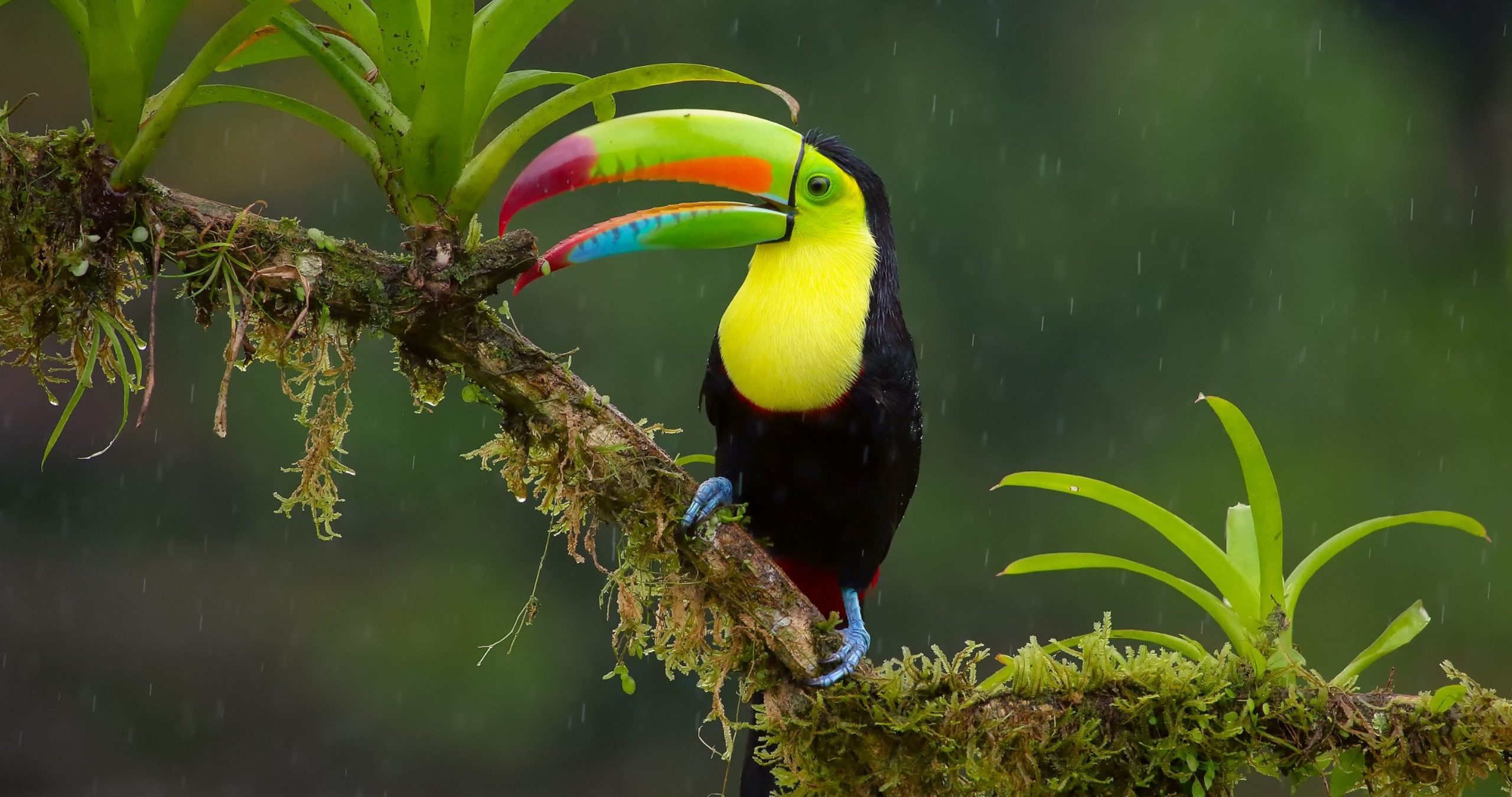 toucan images hd