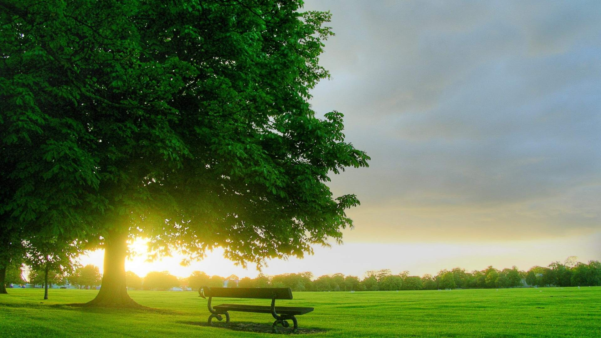 tree photo hd