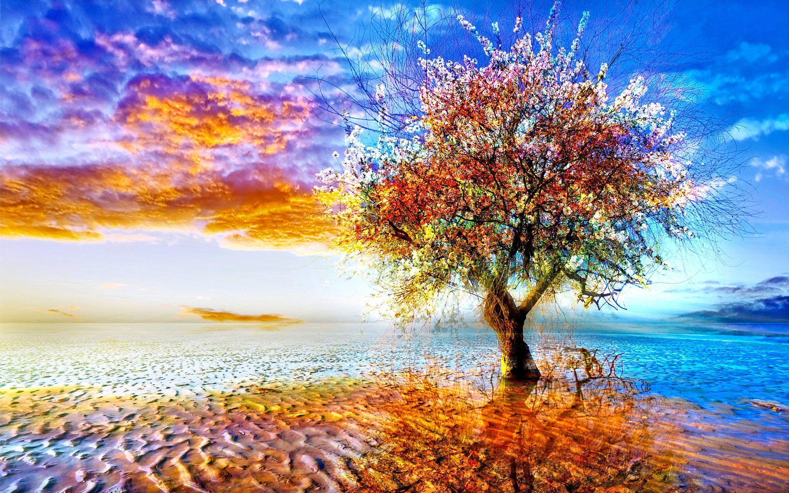 tree wallpaper hd 1080p