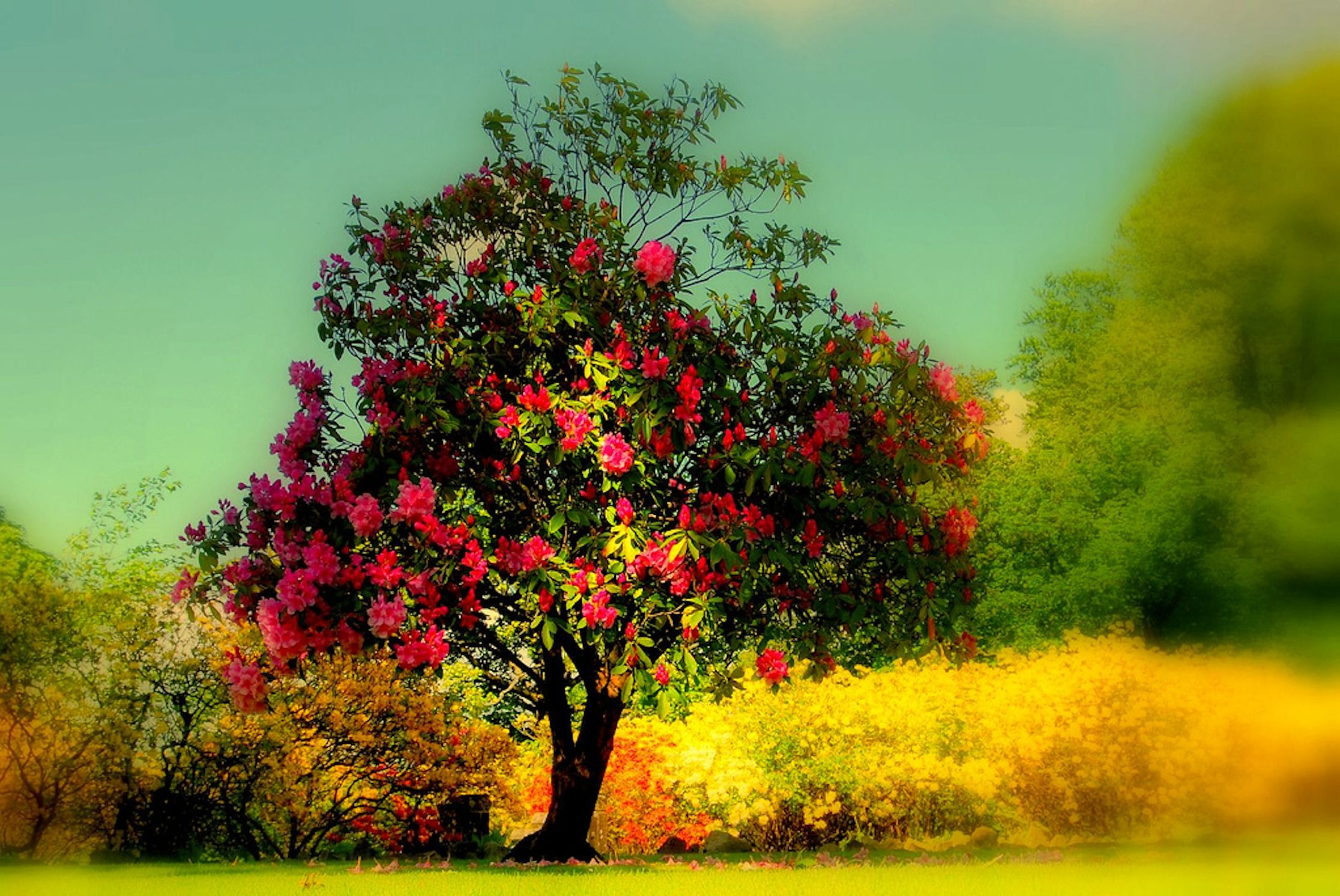 beautiful trees wallpapers
