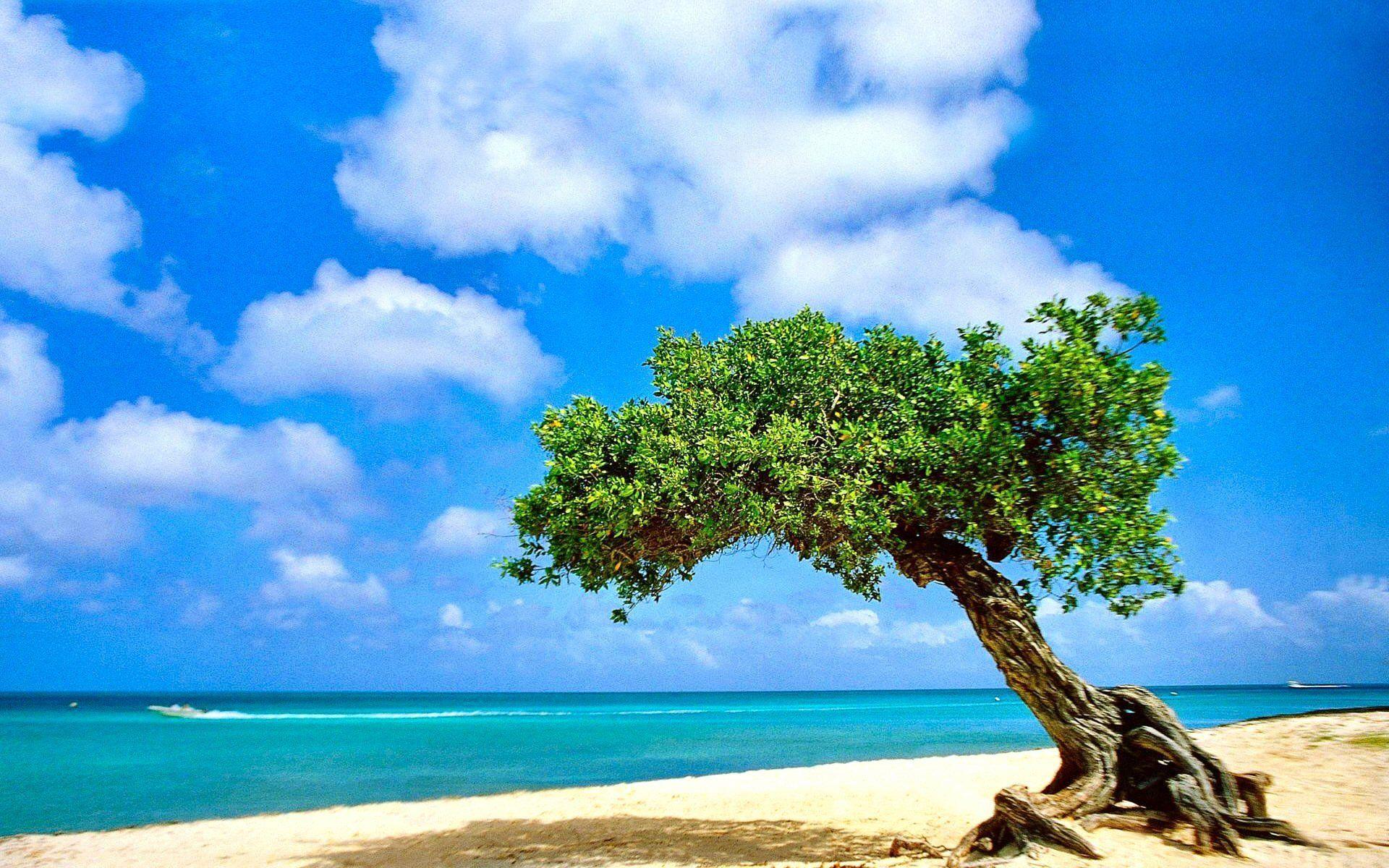 tree hd wallpaper free download