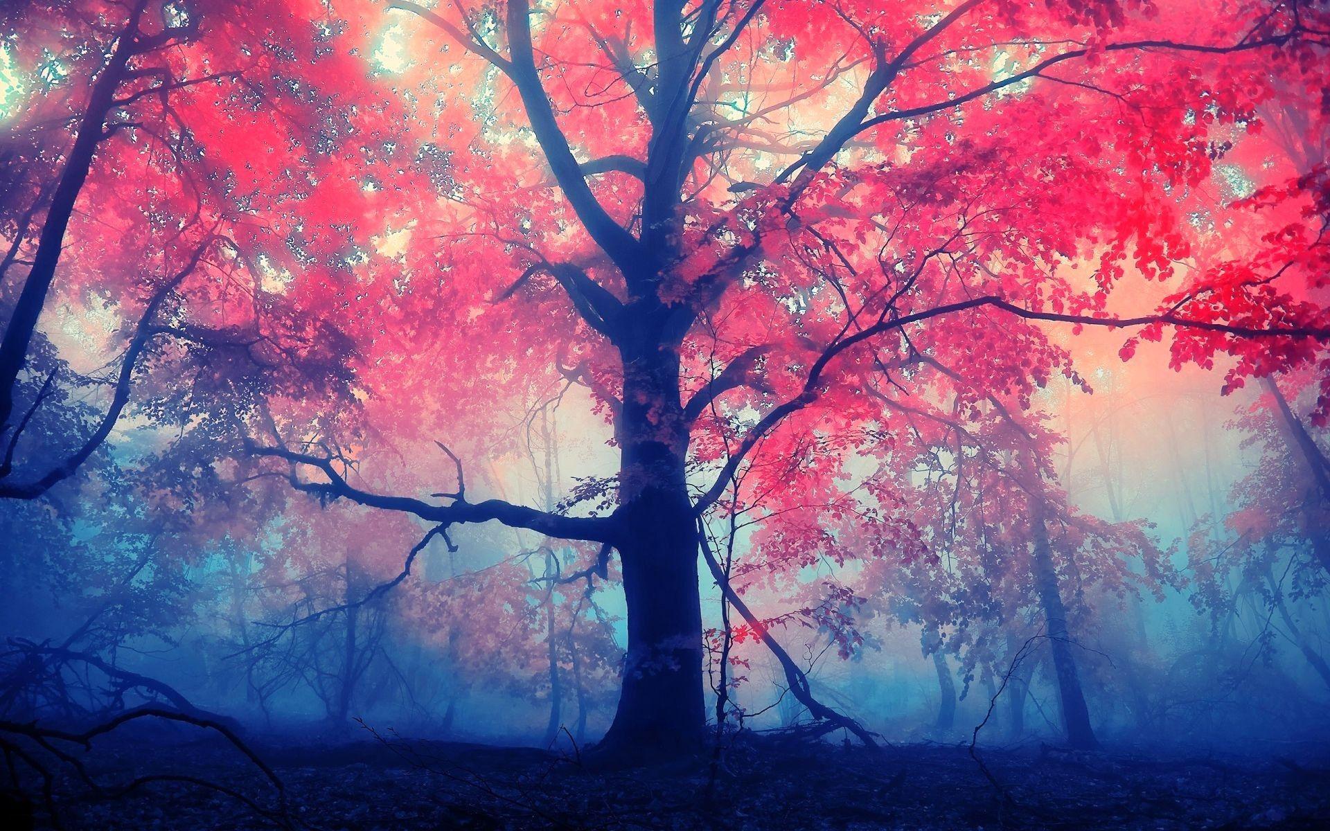 tree hd photo