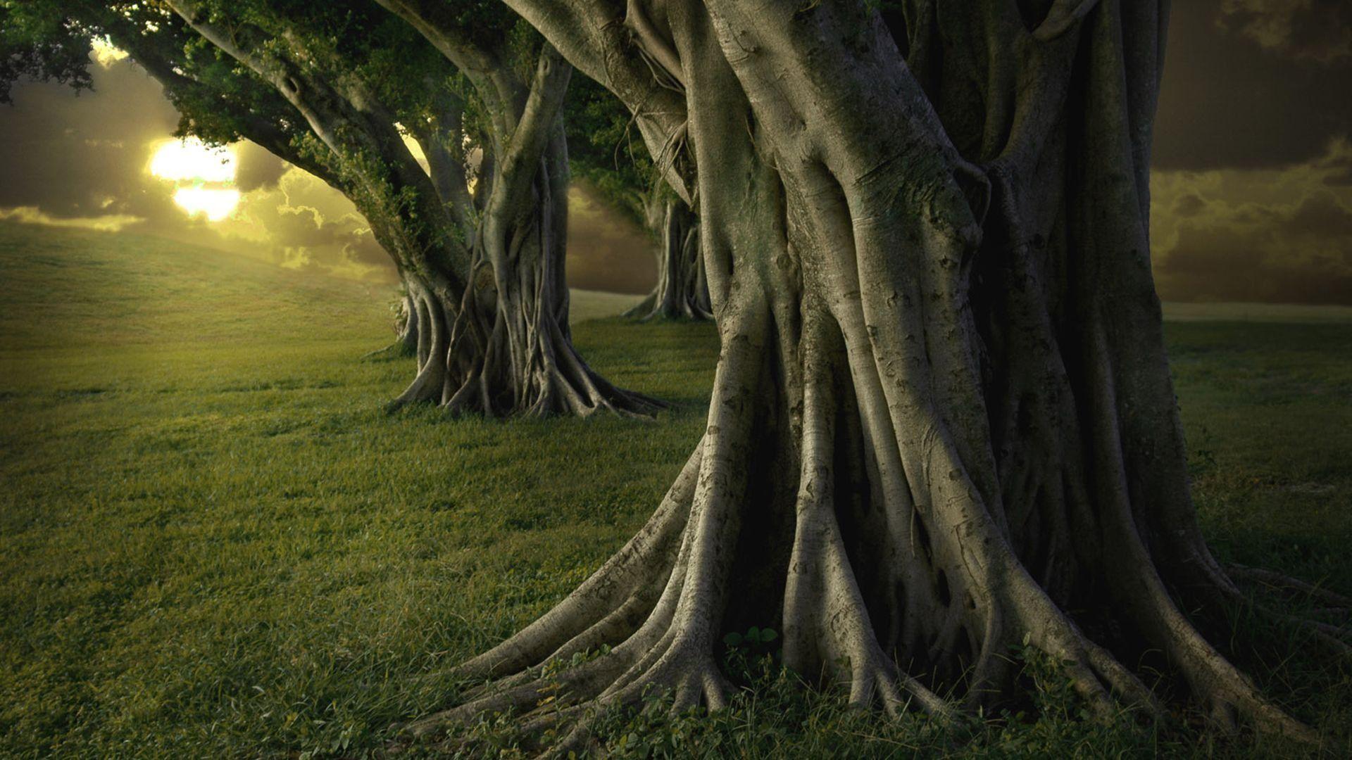 tree desktop background
