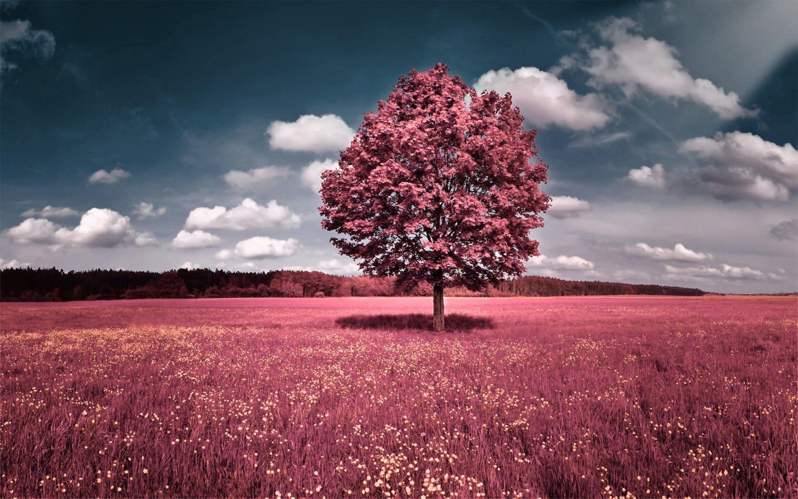 pink tree wallpaper