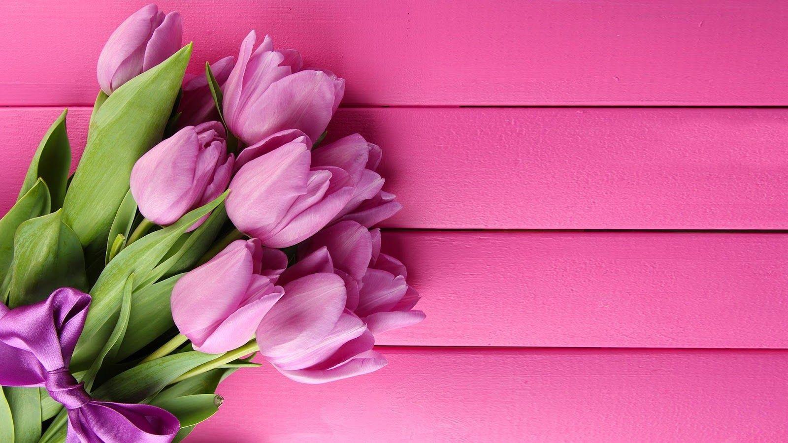 tulip flower pics hd