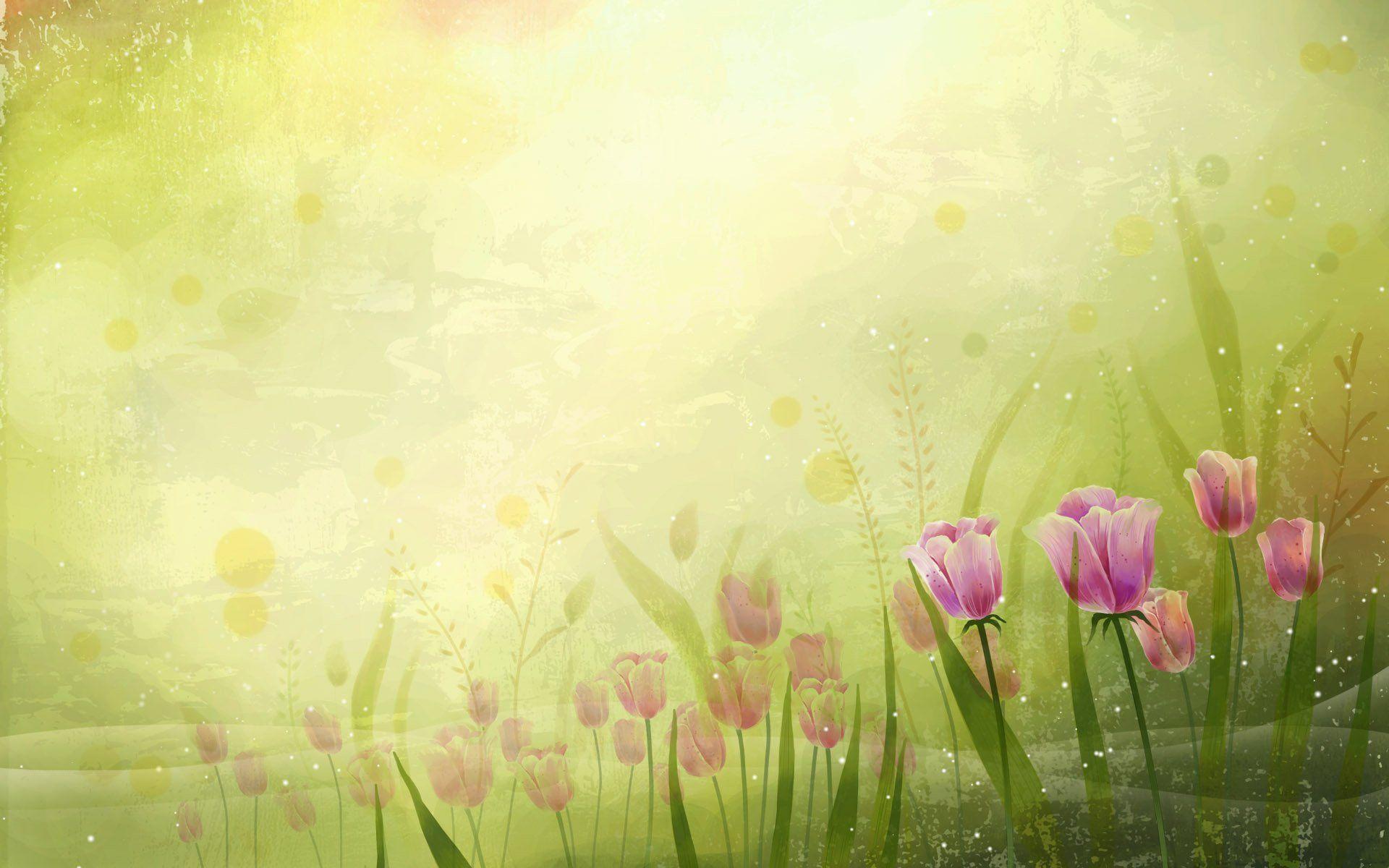 tulip wallpaper hd free