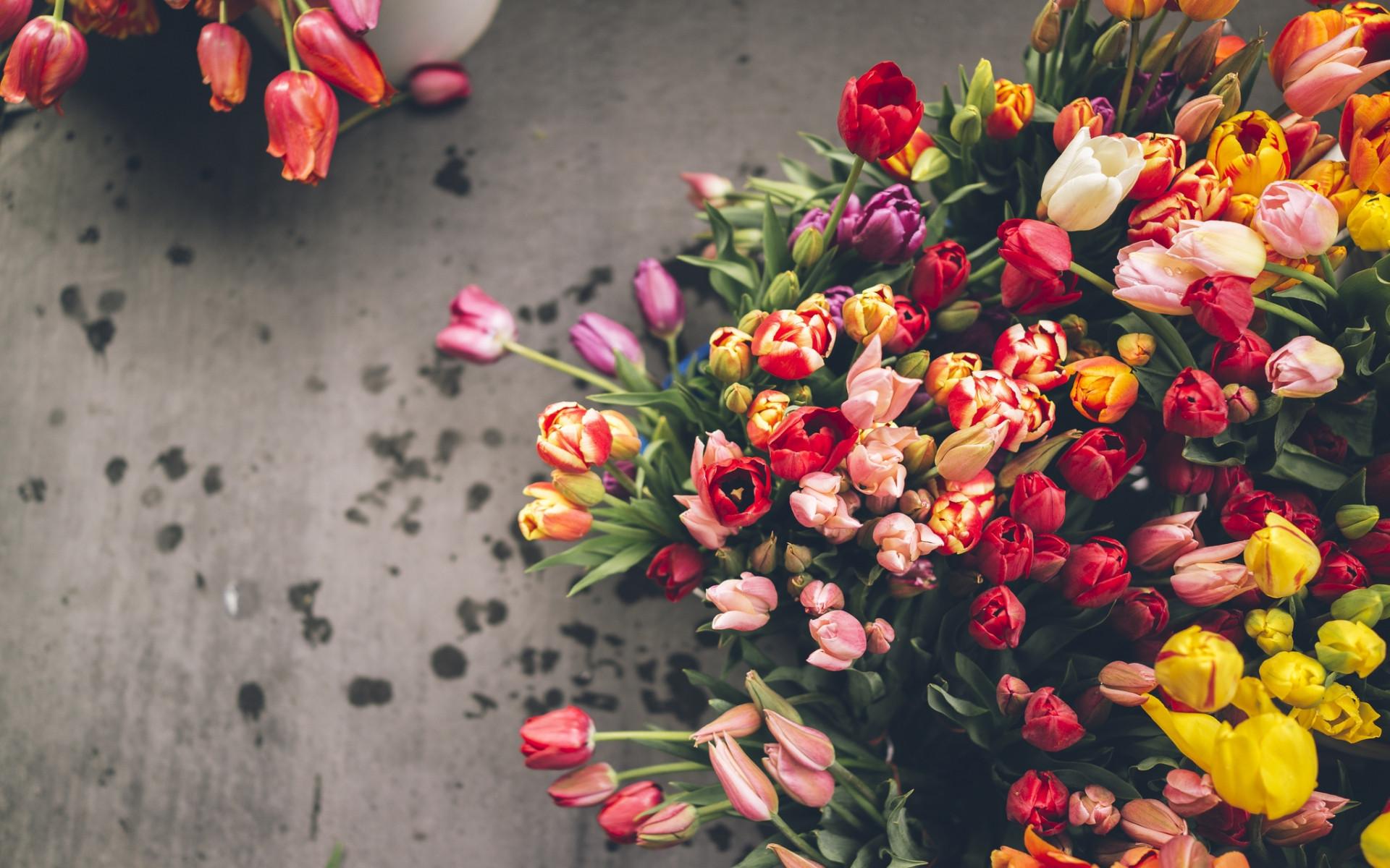 tulip desktop wallpaper 4k