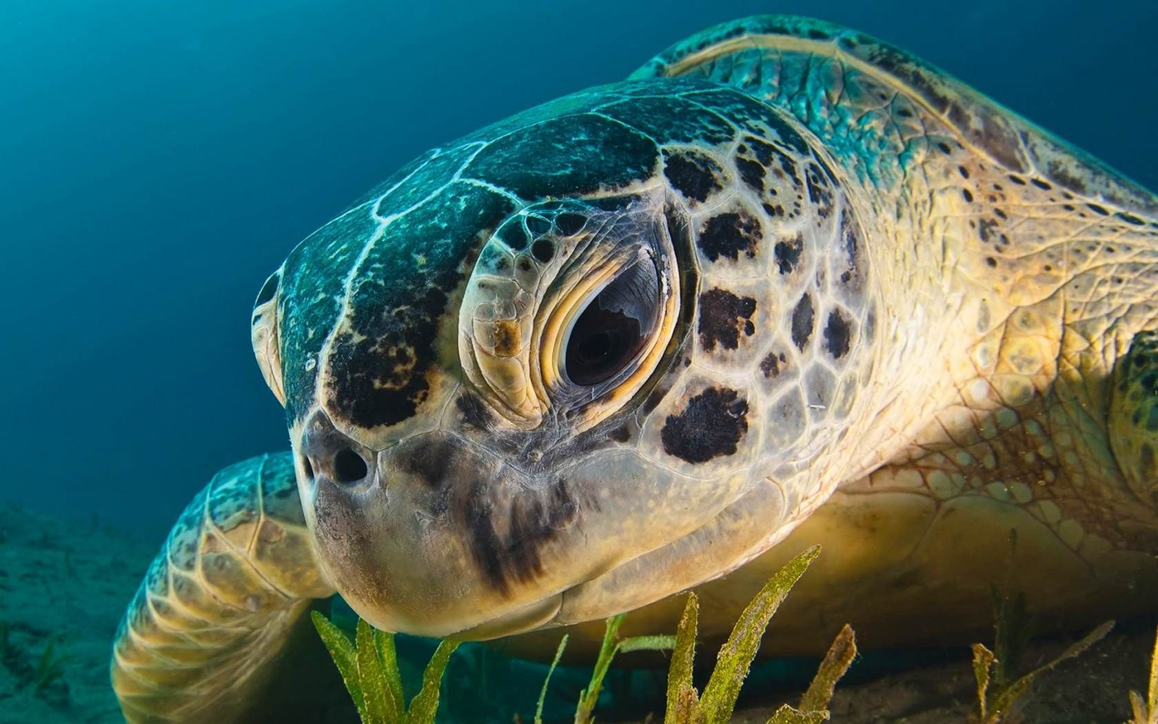 turtle pictures 4k